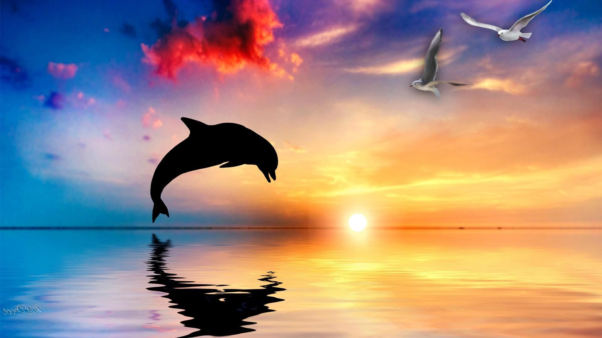 Dolphin Sunset Wallpapers Top Free Dolphin Sunset Backgrounds Wallpaperaccess Hd wallpaper dolphins sunset sky pink