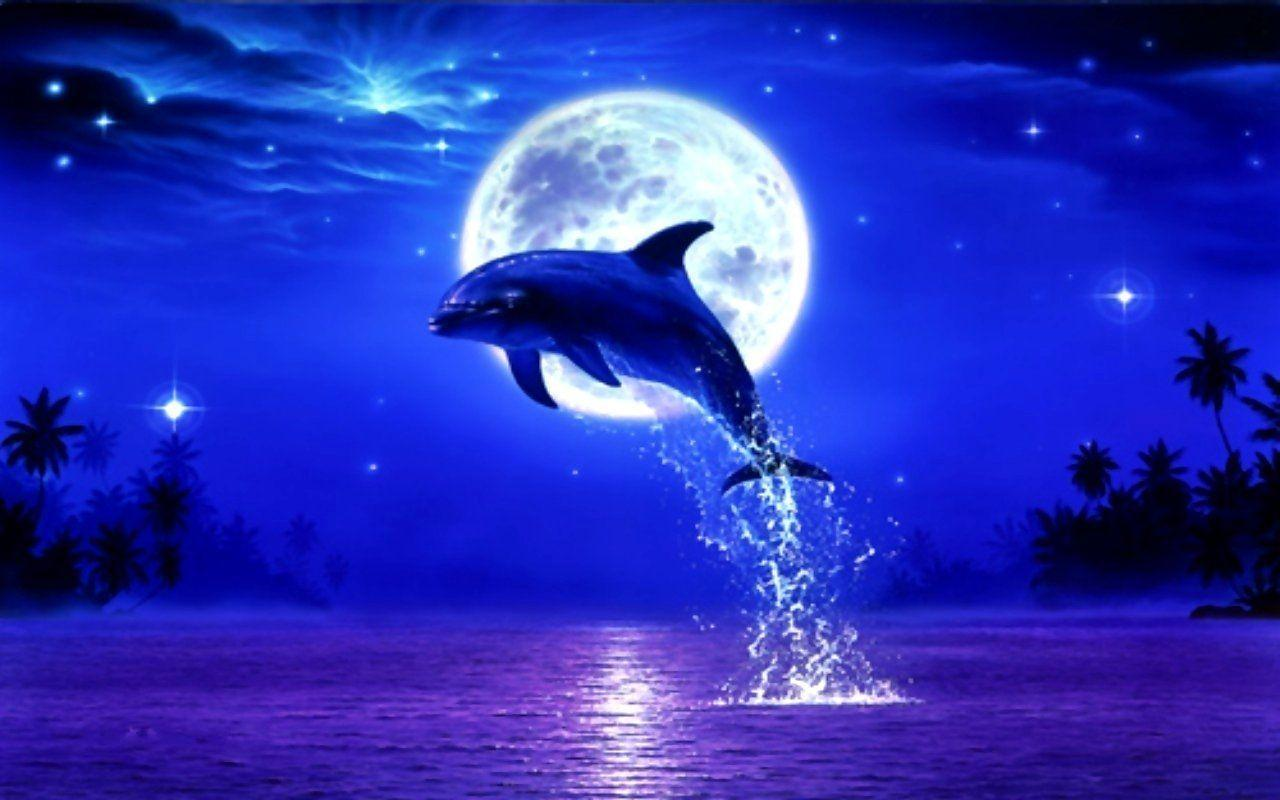 Dolphin Sunset Wallpapers Top Free Dolphin Sunset