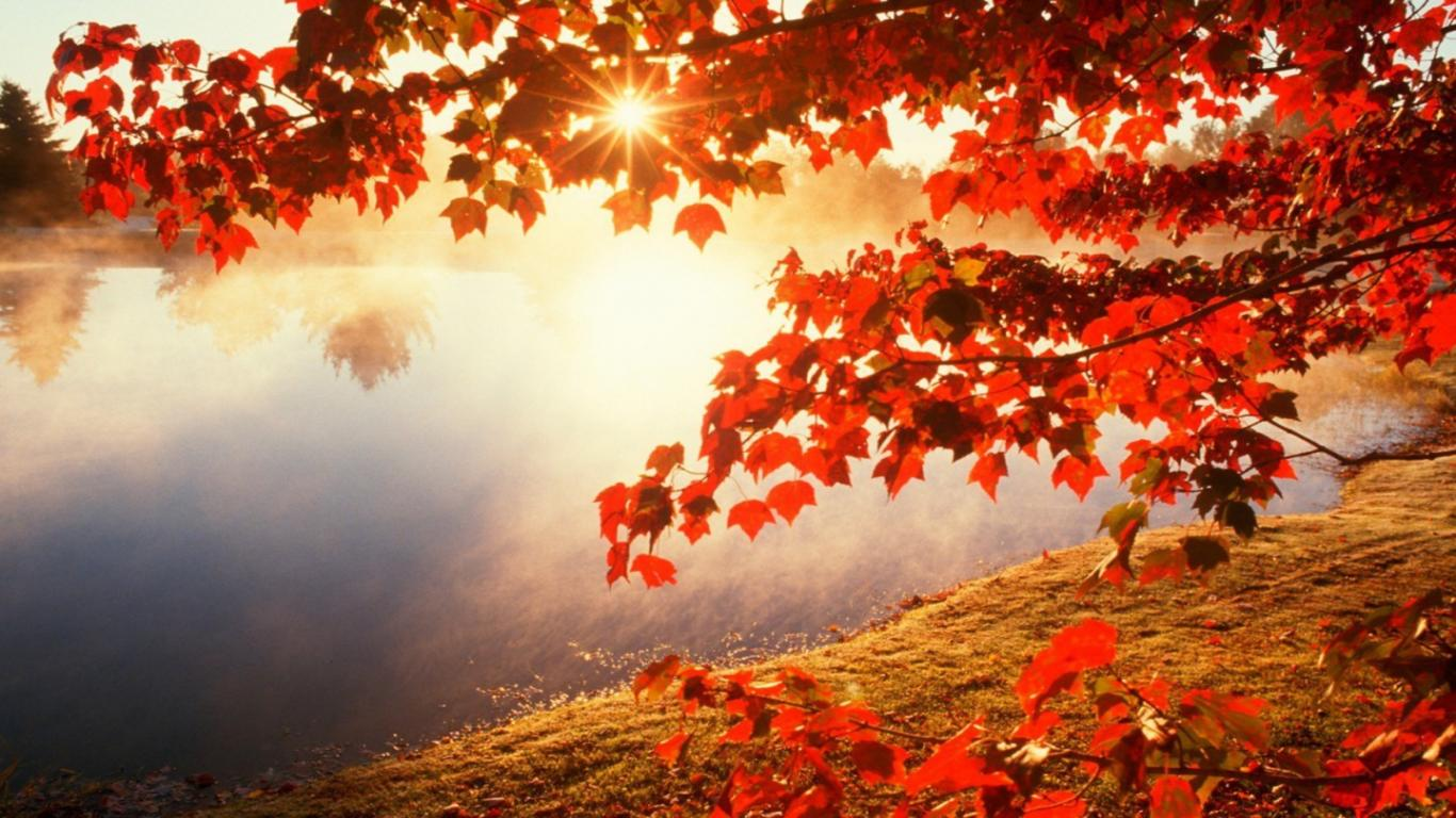 Maple Leaves Wallpapers Top Free Maple Leaves Backgrounds