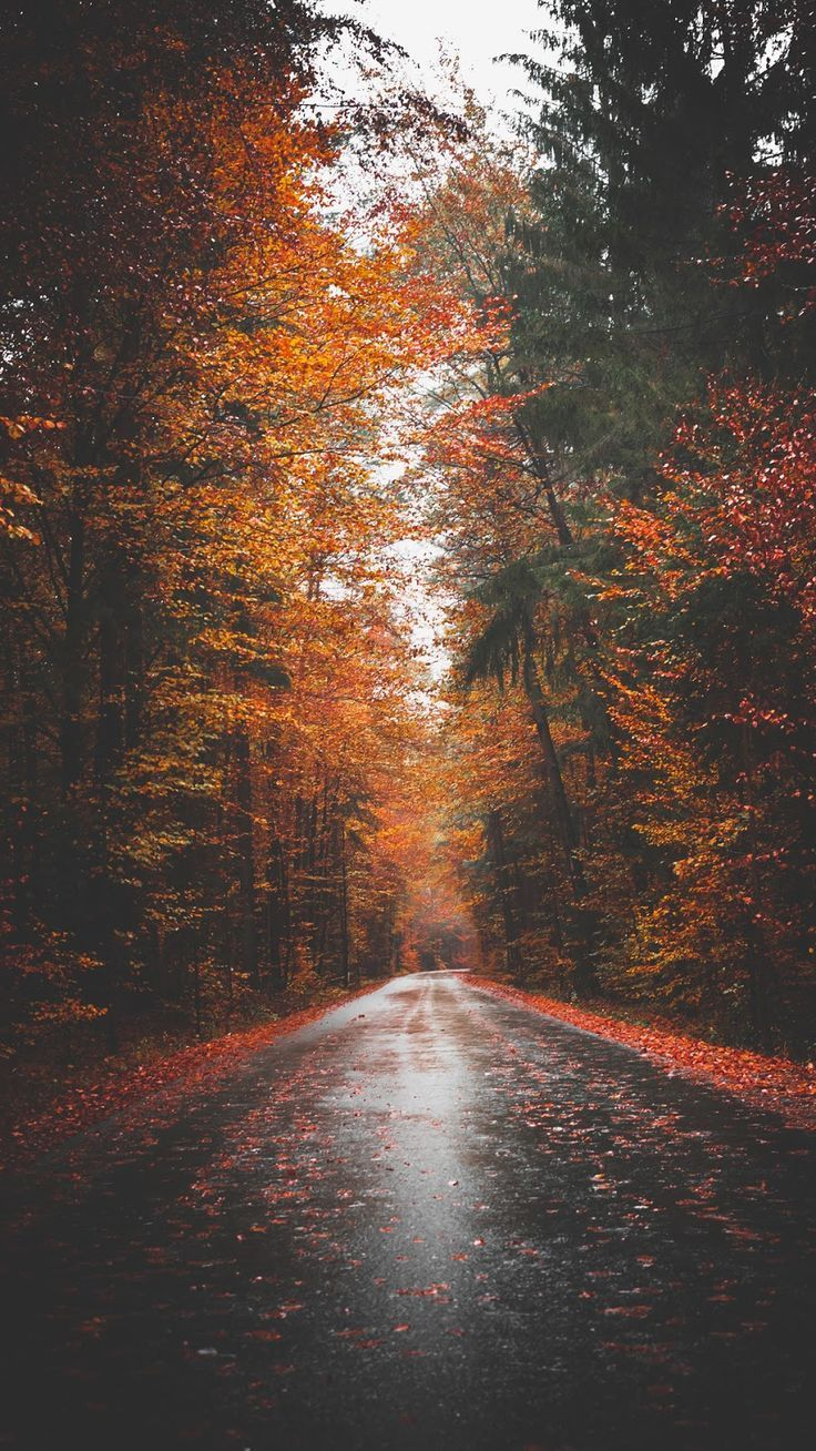 Fall Tumblr Wallpapers Top Free Fall Tumblr Backgrounds Wallpaperaccess