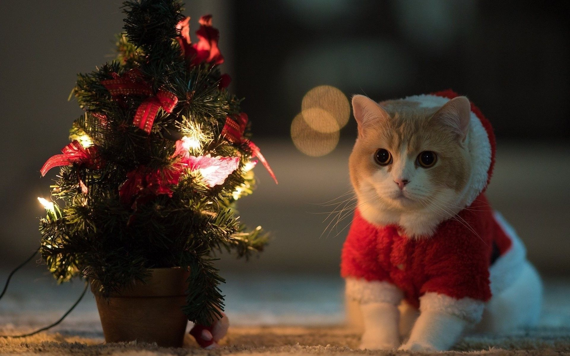 Cute Christmas Cat Desktop Wallpapers Top Free Cute Christmas Cat Desktop Backgrounds Wallpaperaccess