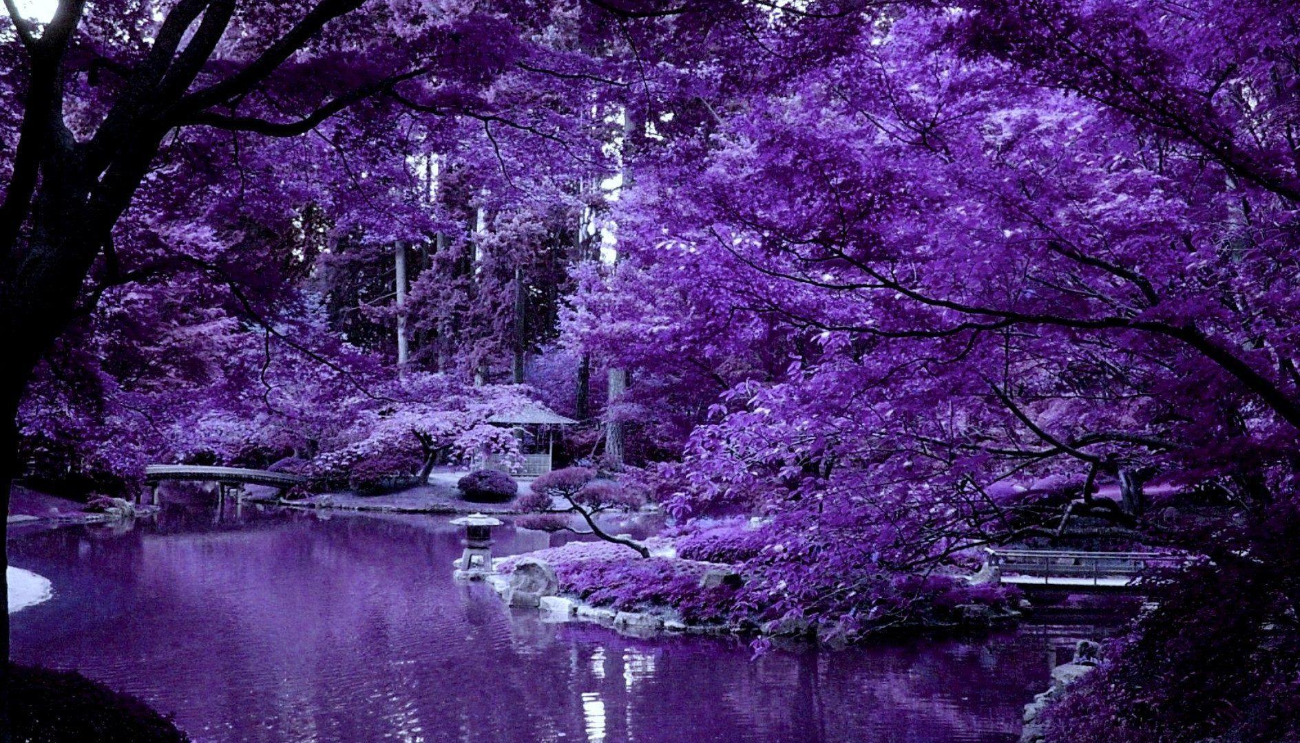 картинка сакуры дерево сиреневая процесс уничтожения вегетативных