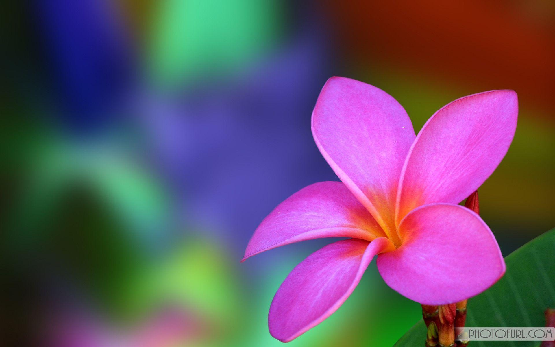 Hd Flower Wallpapers Top Free Hd Flower Backgrounds Wallpaperaccess
