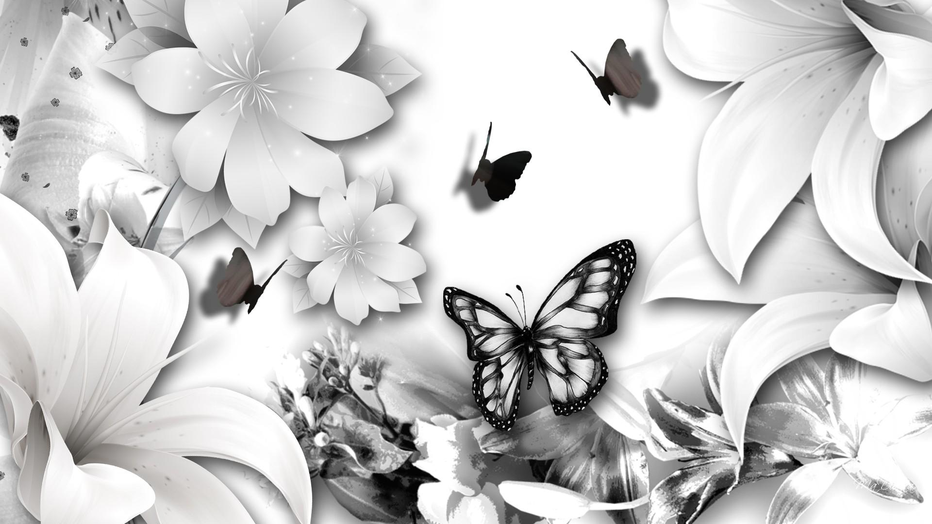 White Butterfly Wallpapers Top Free White Butterfly Backgrounds