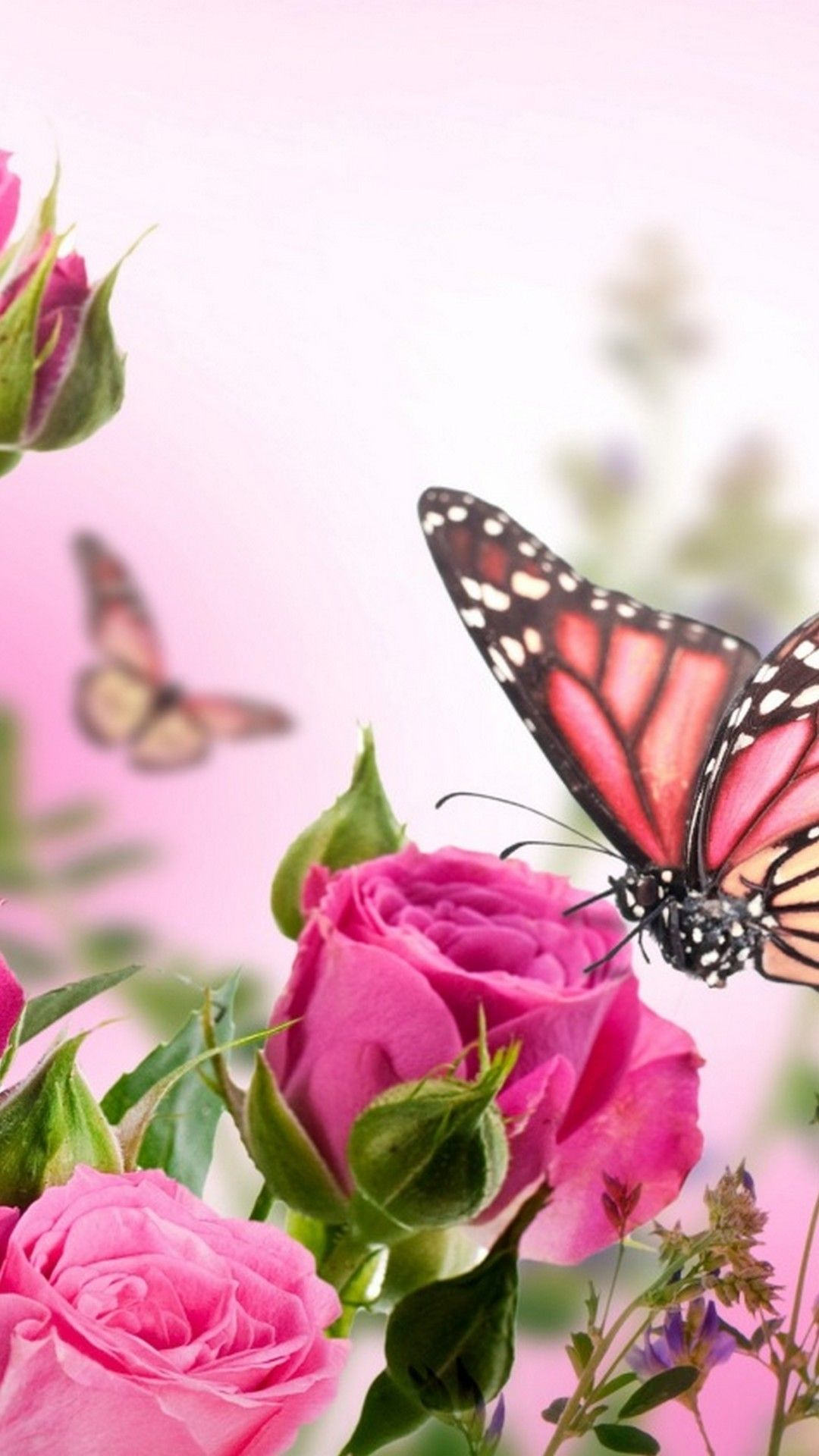Pink Roses and Butterfly Wallpapers - Top Free Pink Roses ...
