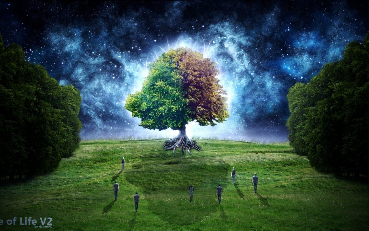 Tree Of Life Wallpapers Top Free Tree Of Life Backgrounds