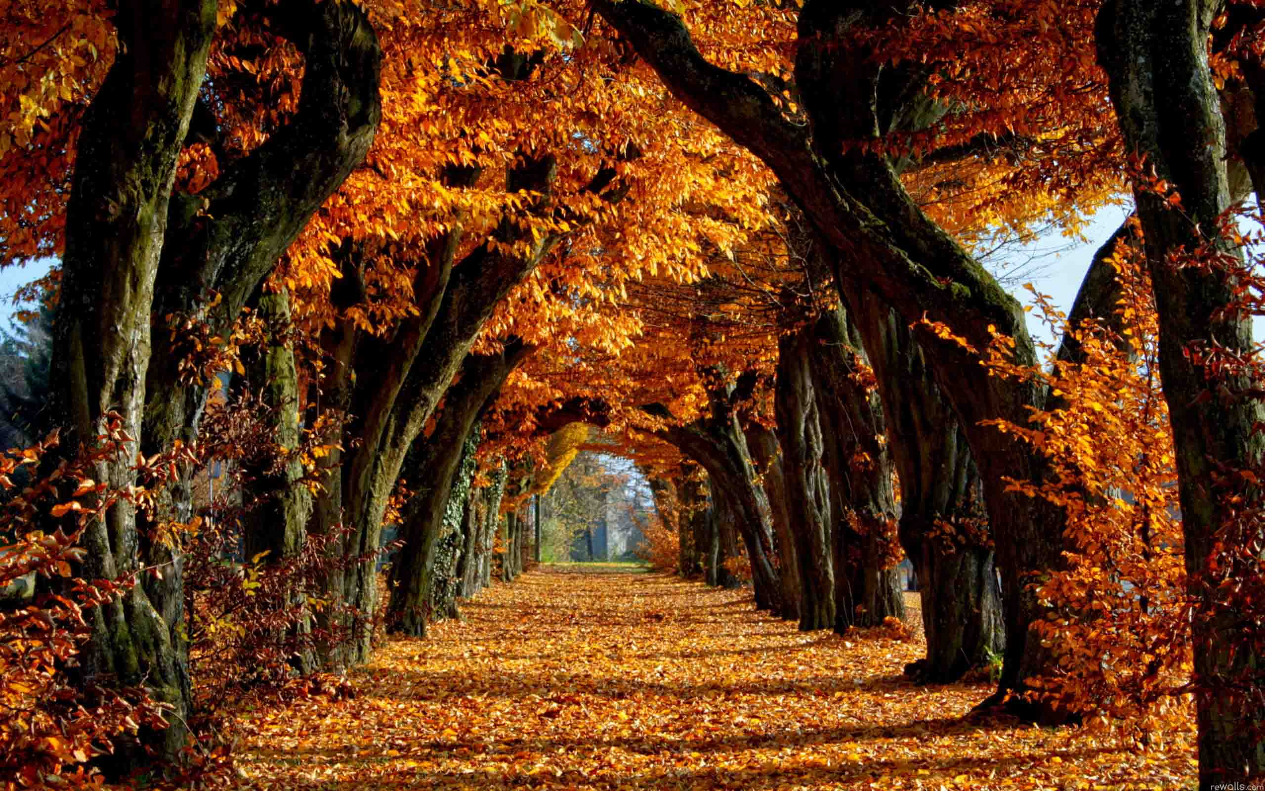 Fall Season Wallpapers Top Free Fall Season Backgrounds