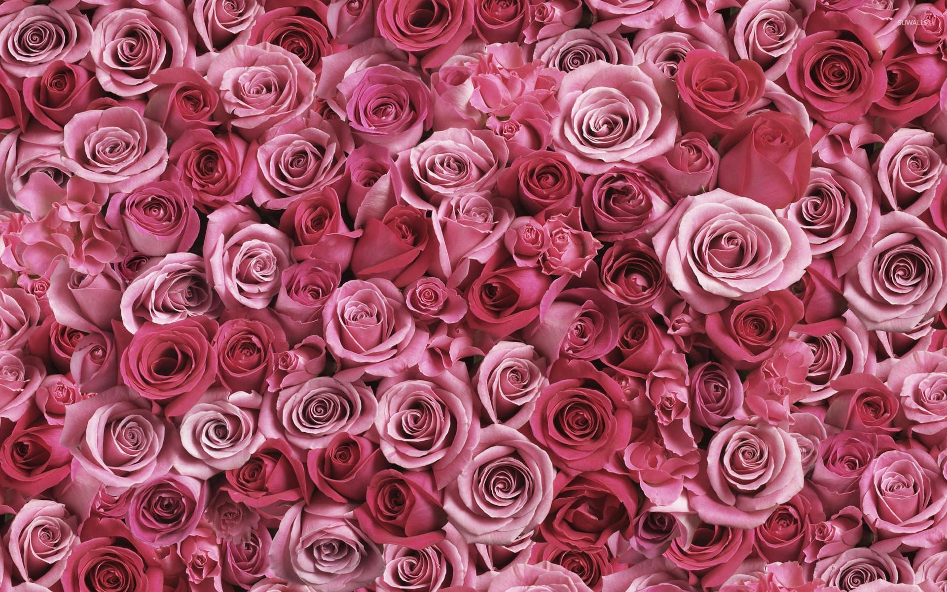 High Resolution Pink Wallpapers