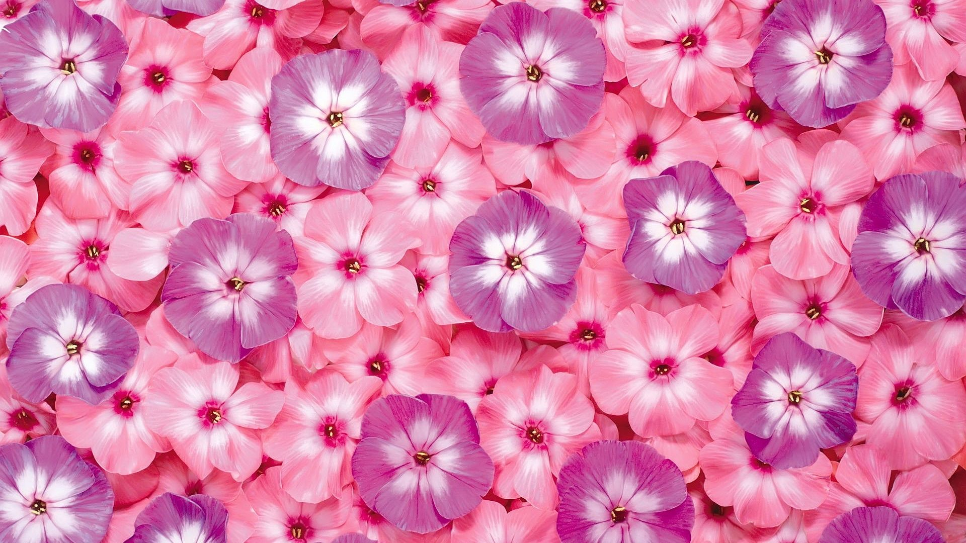 Pink Floral Wallpapers Top Free Pink Floral Backgrounds