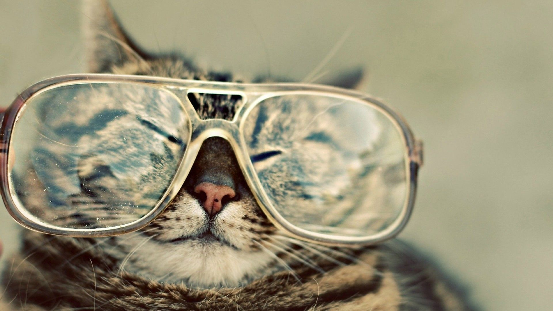 Funny Animals Wallpapers Top Free Funny Animals Backgrounds Wallpaperaccess