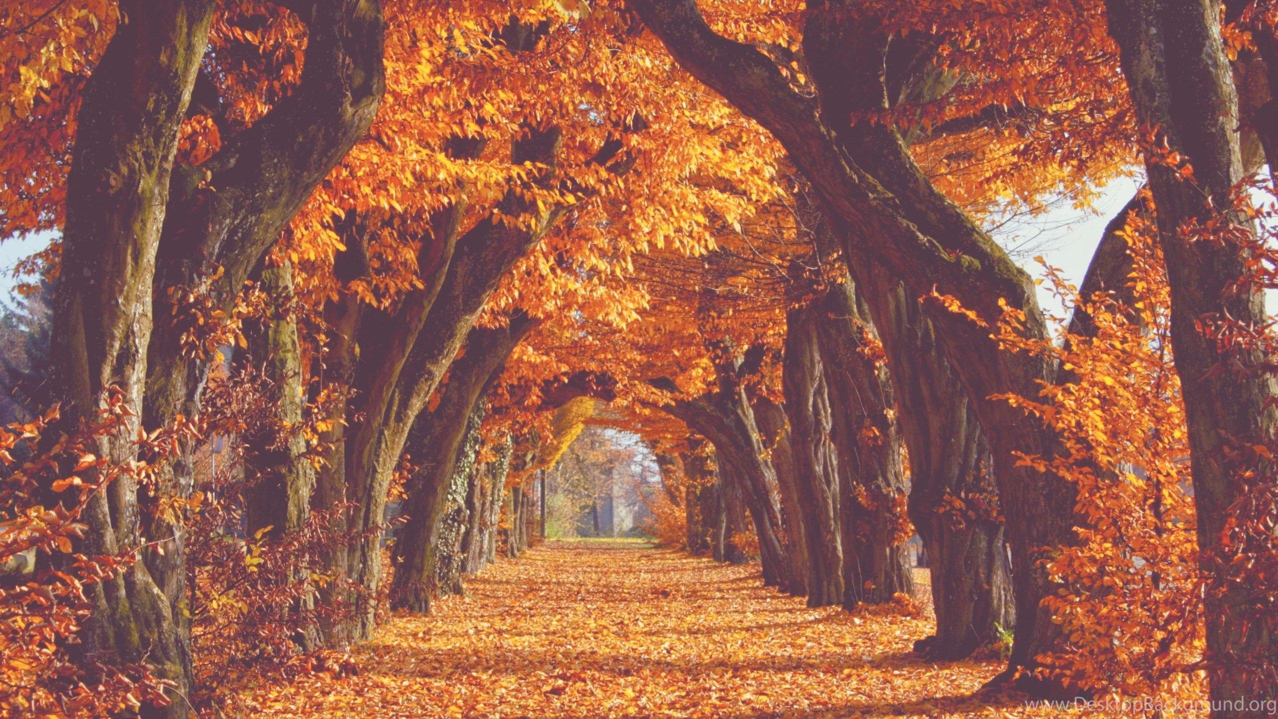 Tumblr Autumn Desktop Wallpapers - Top Free Tumblr Autumn ...