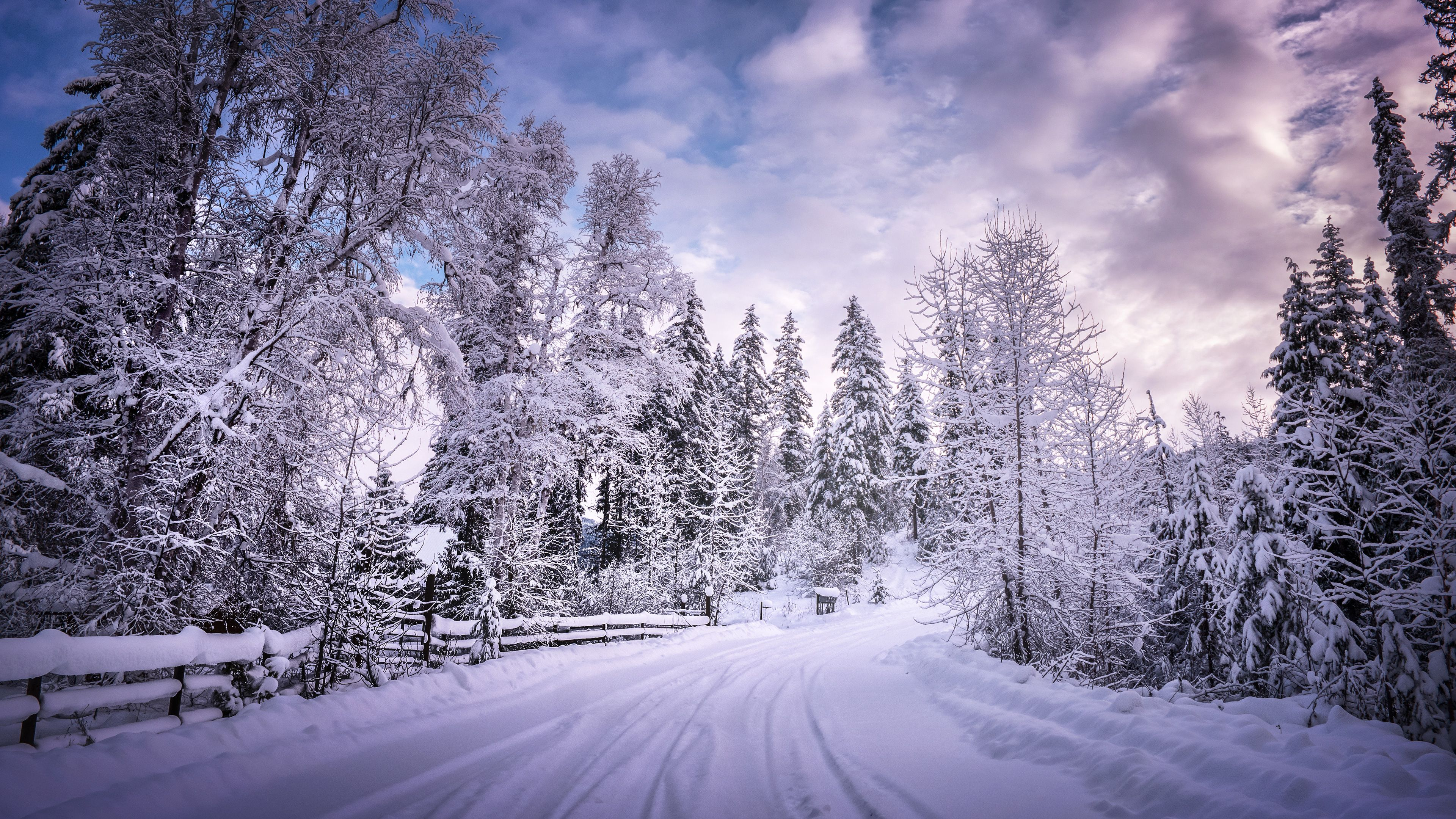 Snow Trees Wallpapers Top Free Snow Trees Backgrounds Wallpaperaccess