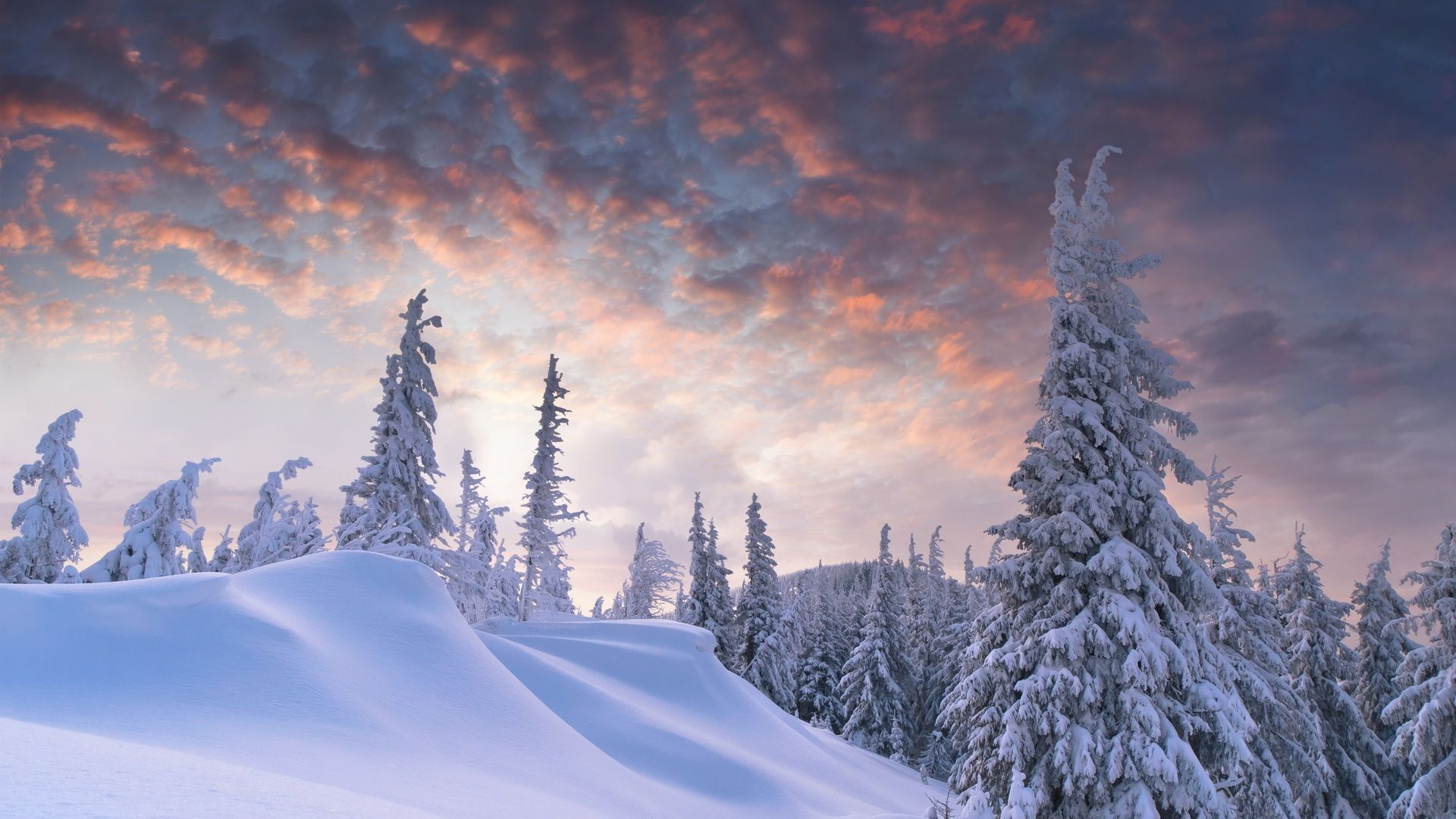 27 Nature Aesthetic Winter Desktop Wallpaper Basty Wallpaper