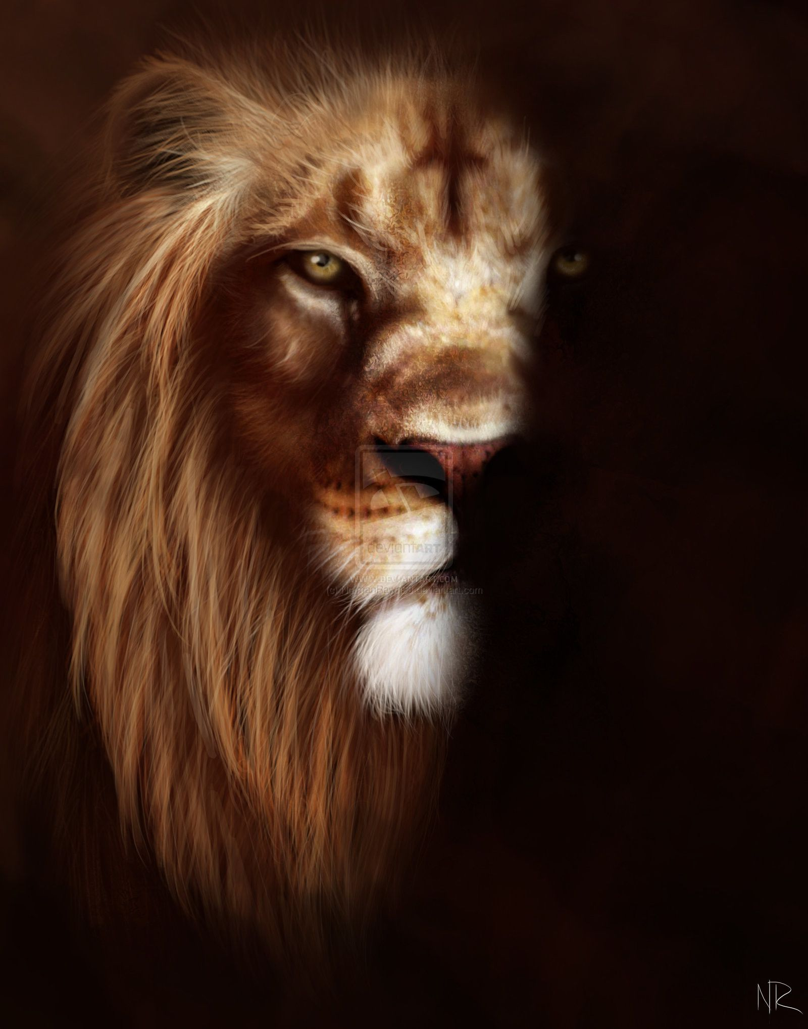 Angry Lion Wallpapers Top Free Angry Lion Backgrounds Wallpaperaccess