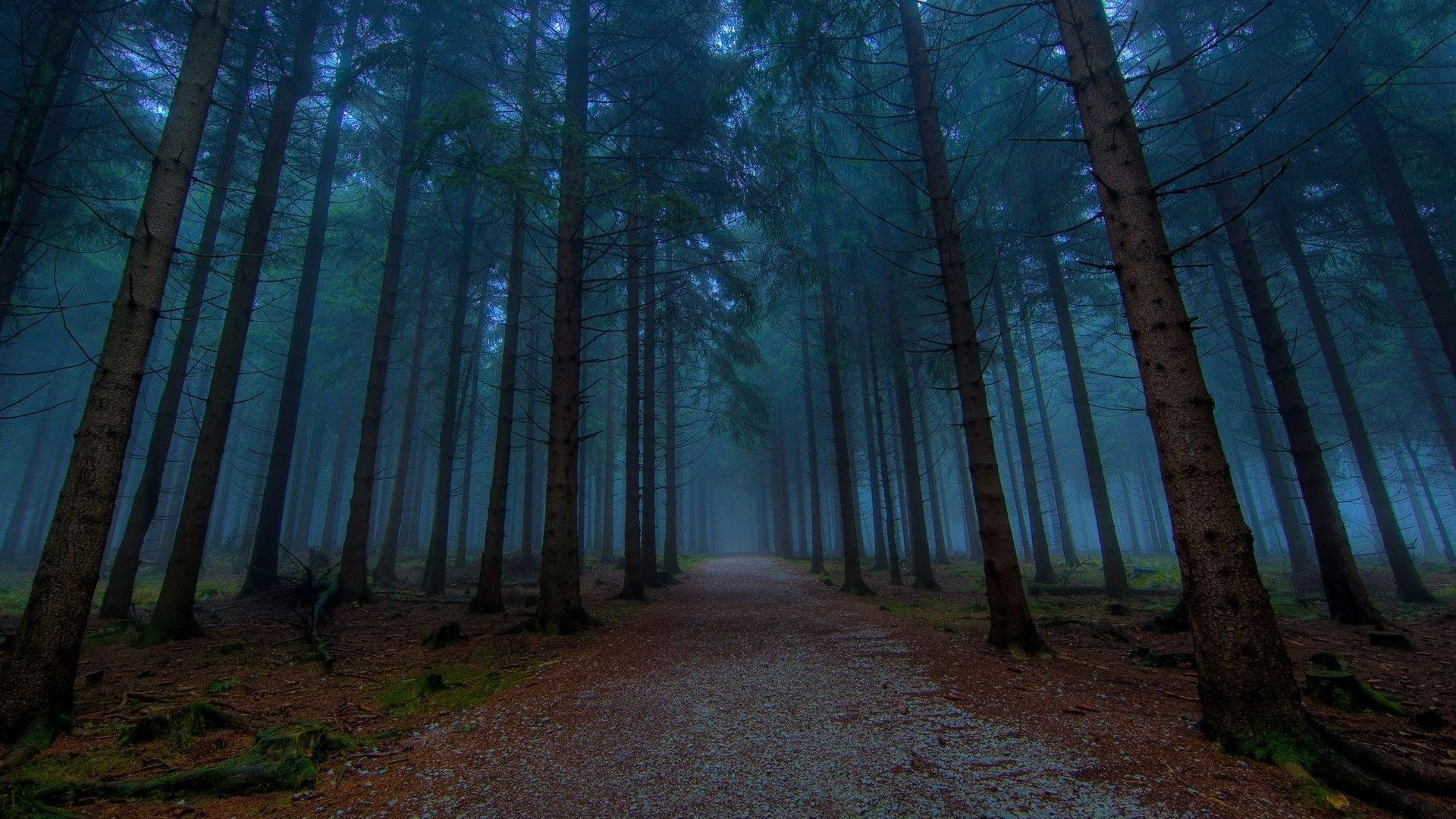 Woods Wallpapers Top Free Woods Backgrounds Wallpaperaccess