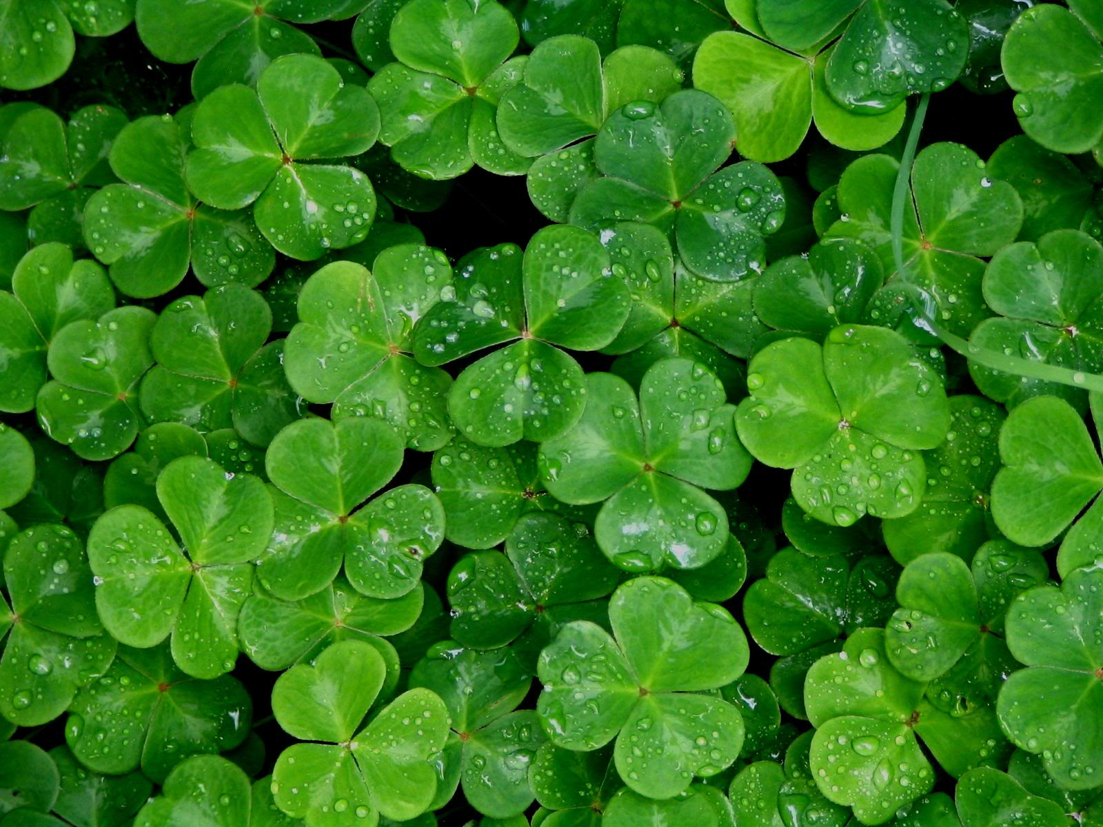 Shamrock Wallpapers Top Free Shamrock Backgrounds