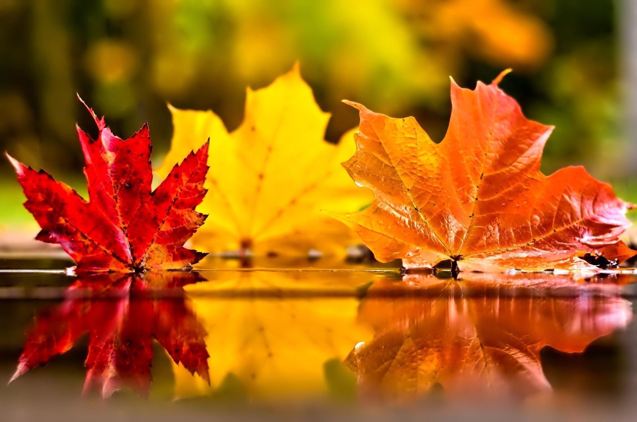 November Autumn Wallpapers Top Free November Autumn