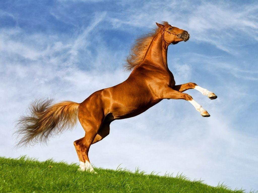 Cute Horse Wallpapers Top Free Cute Horse Backgrounds Wallpaperaccess