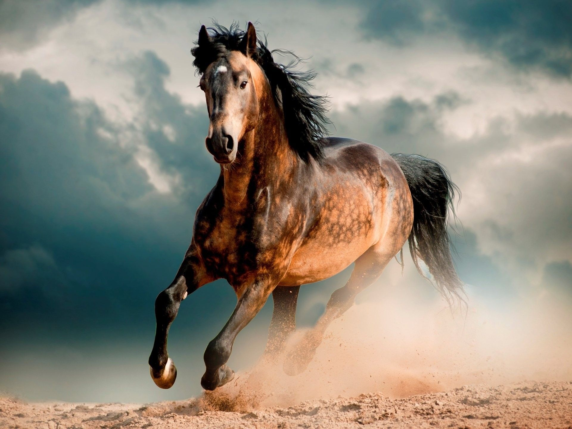 Mustang Horse Wallpapers Top Free Mustang Horse Backgrounds