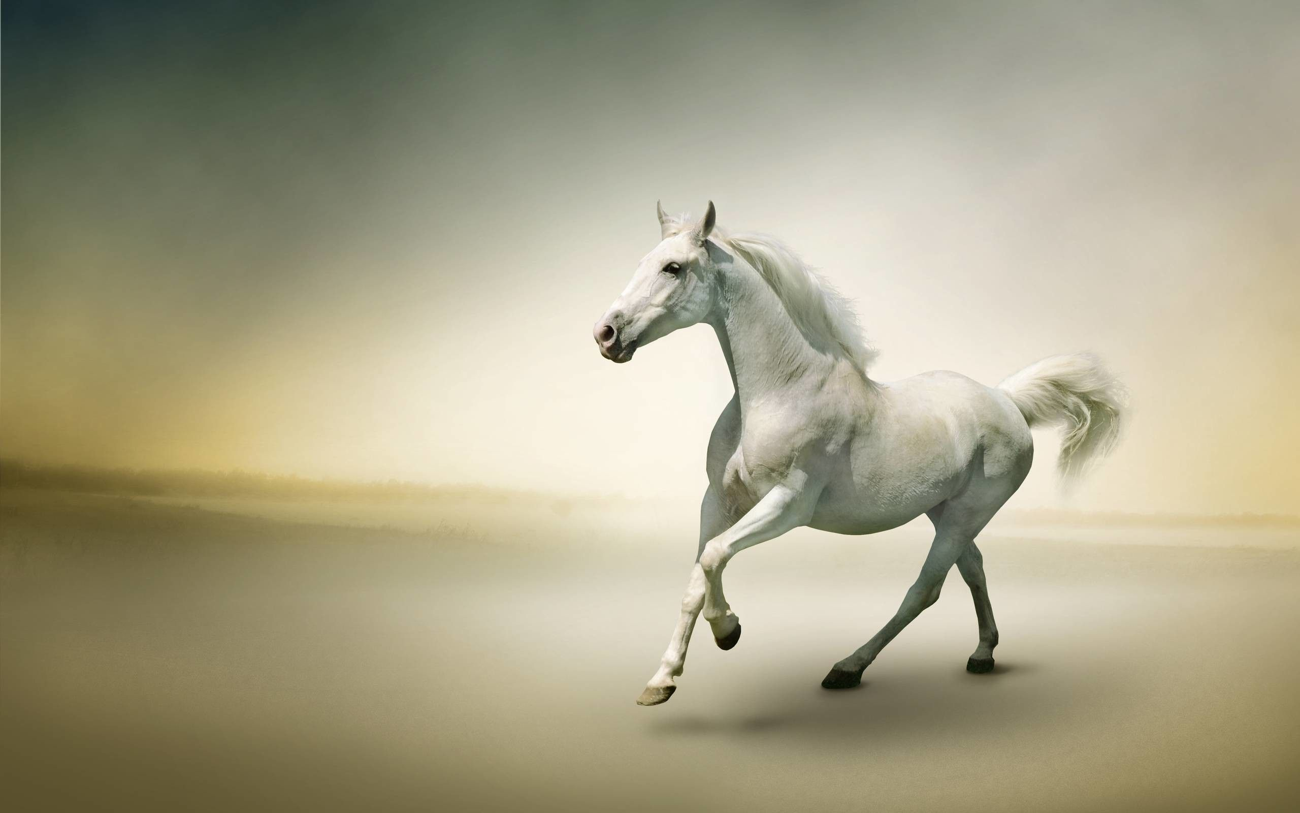White Horse Wallpapers Top Free White Horse Backgrounds Wallpaperaccess