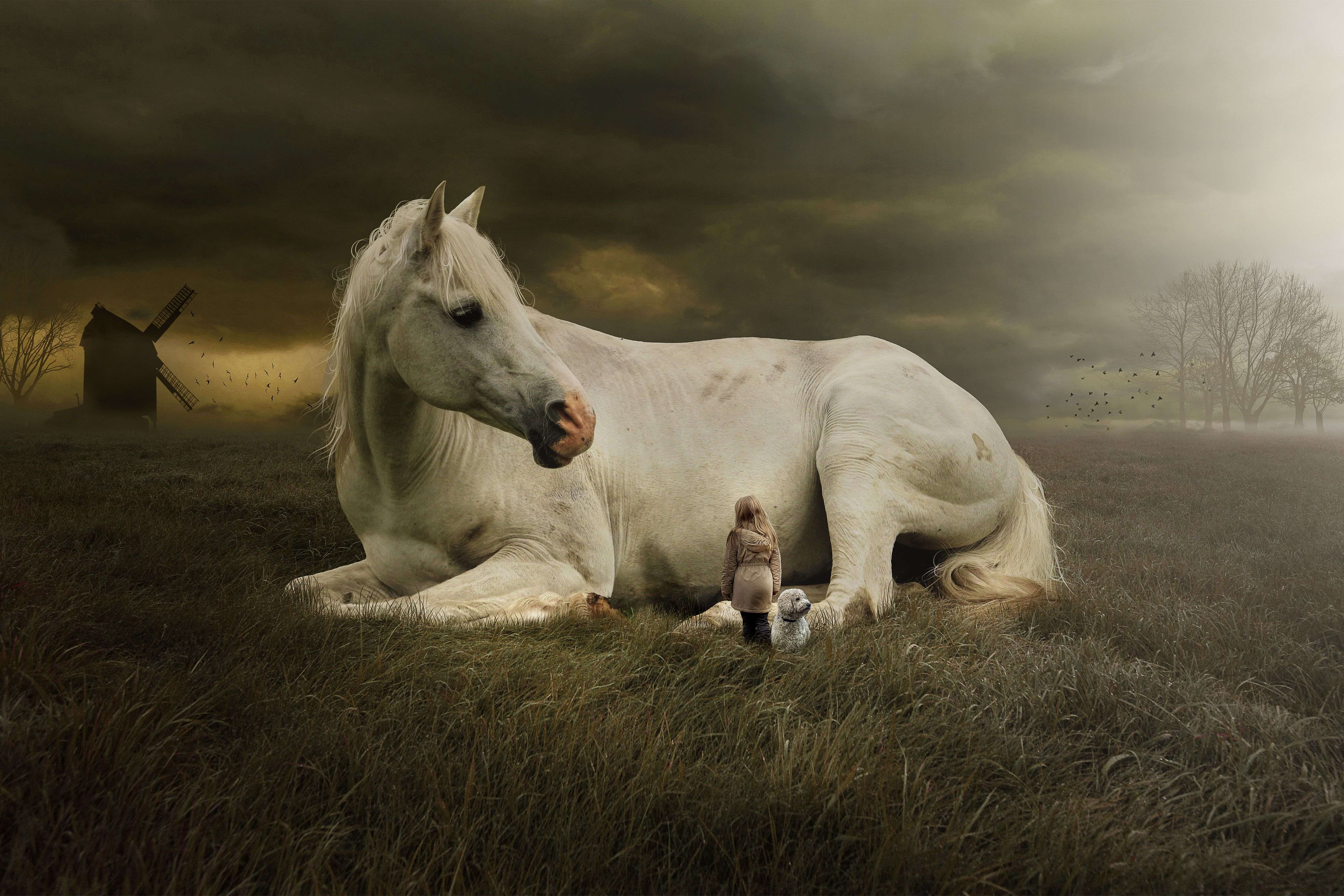 Cute Horse Wallpapers Top Free Cute Horse Backgrounds