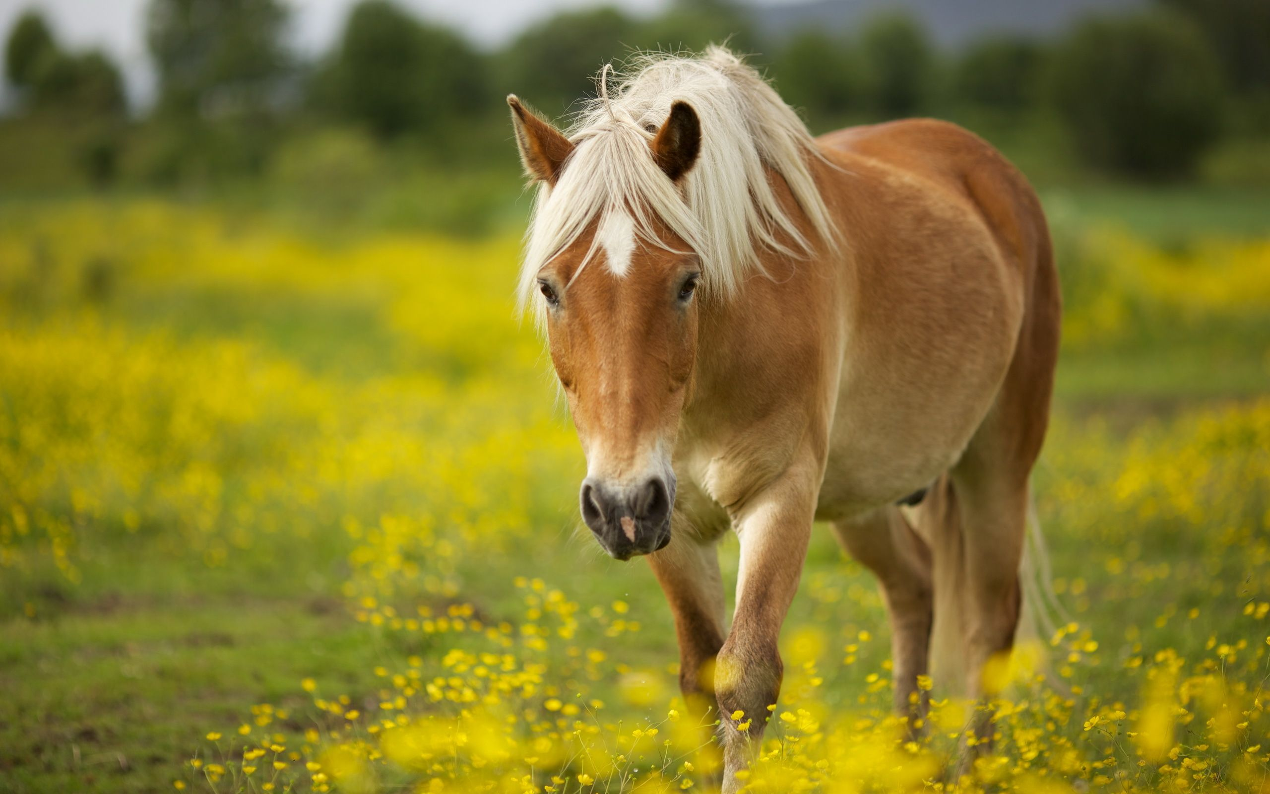 Spring Horse Wallpapers Top Free Spring Horse Backgrounds Wallpaperaccess