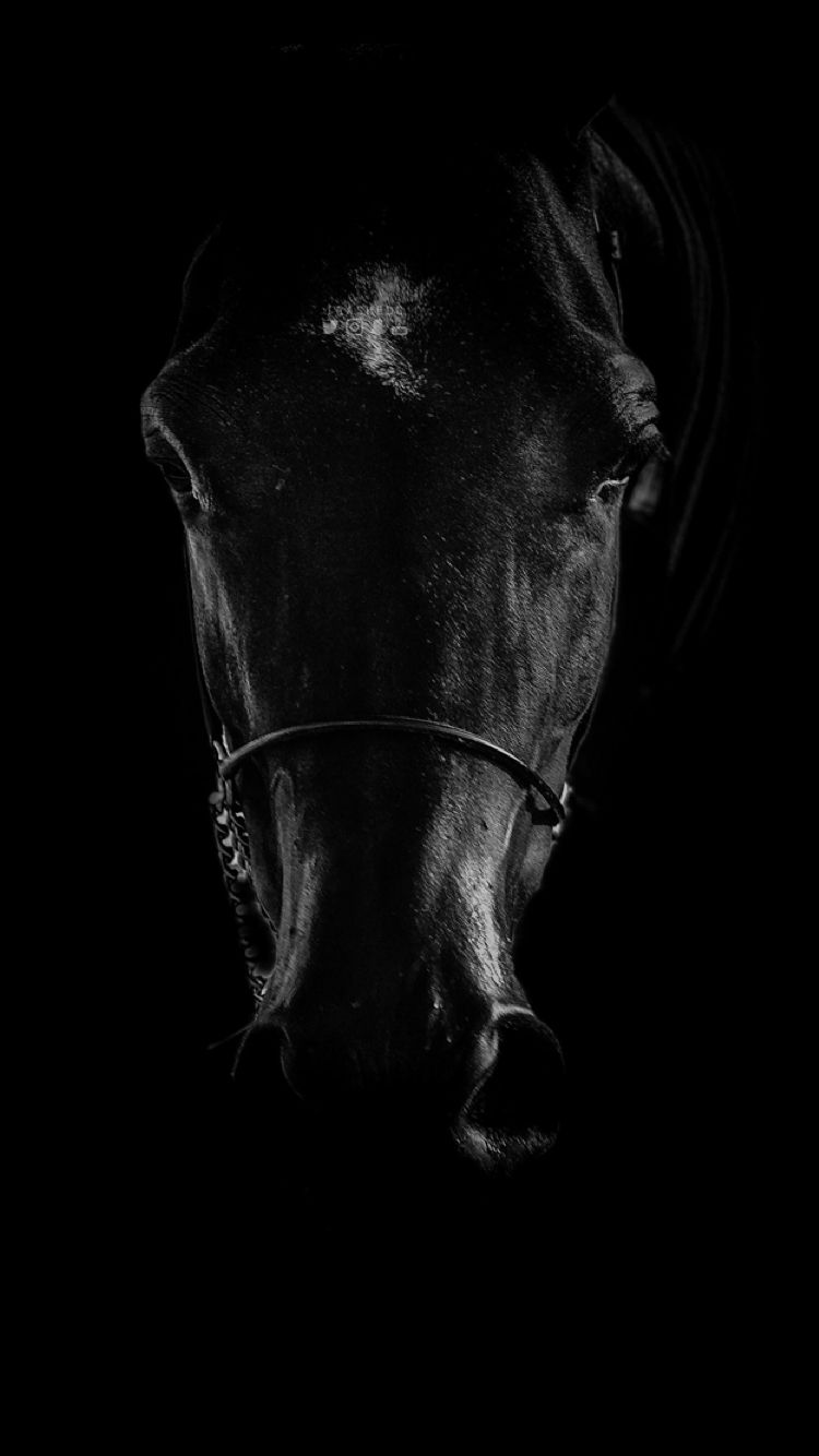 Black Horse Iphone Wallpapers Top Free Black Horse Iphone Backgrounds Wallpaperaccess