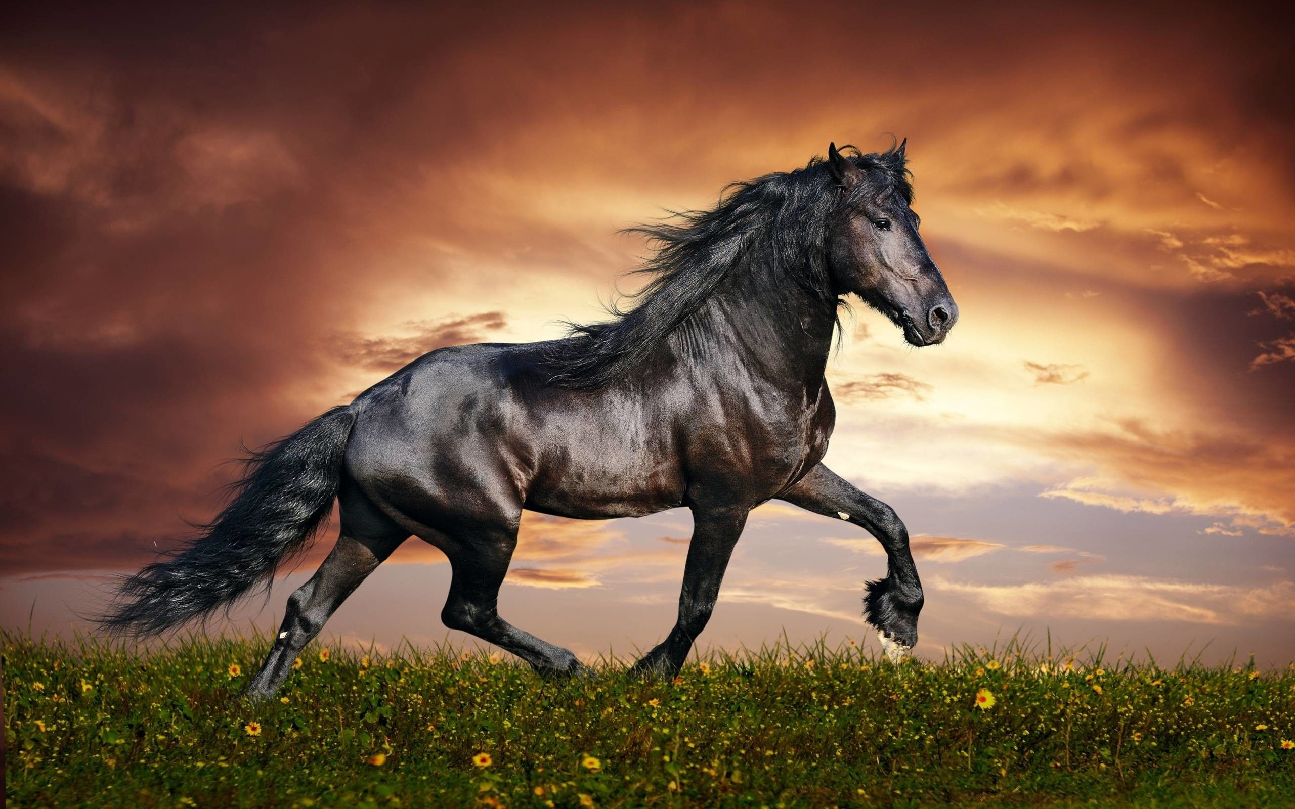 Stallion Wallpapers Top Free Stallion Backgrounds Wallpaperaccess