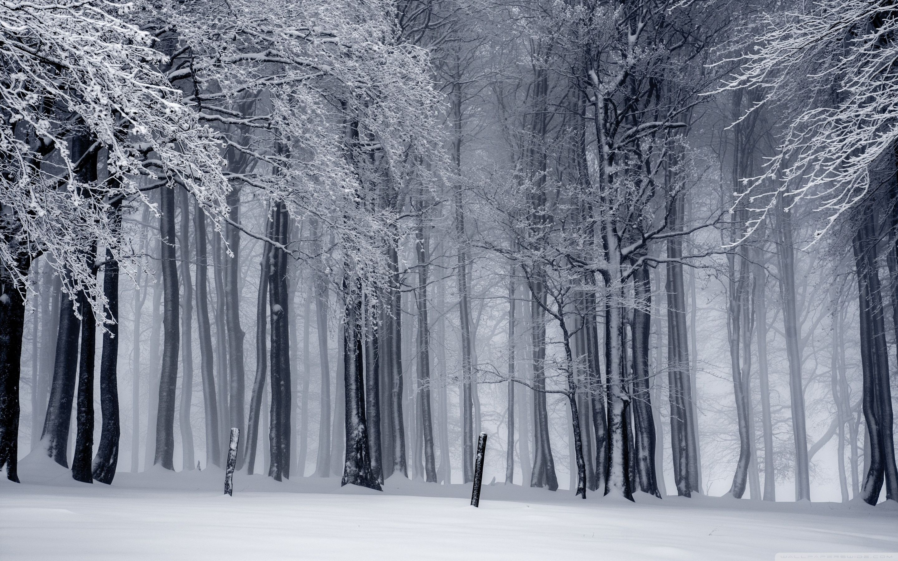 Winter Forest Wallpapers Top Free Winter Forest