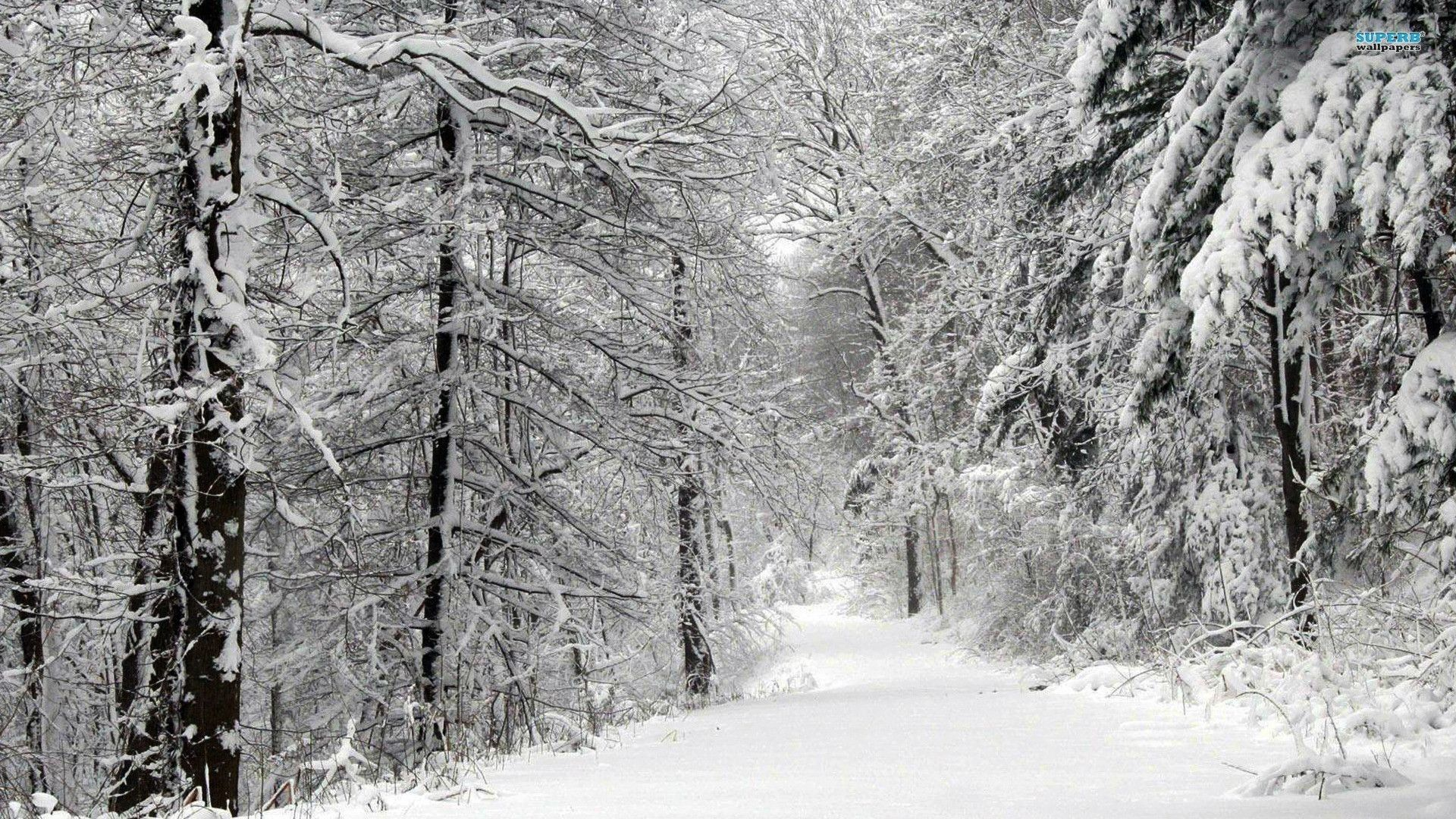 55 Best Free Winter Forest Wallpapers Wallpaperaccess