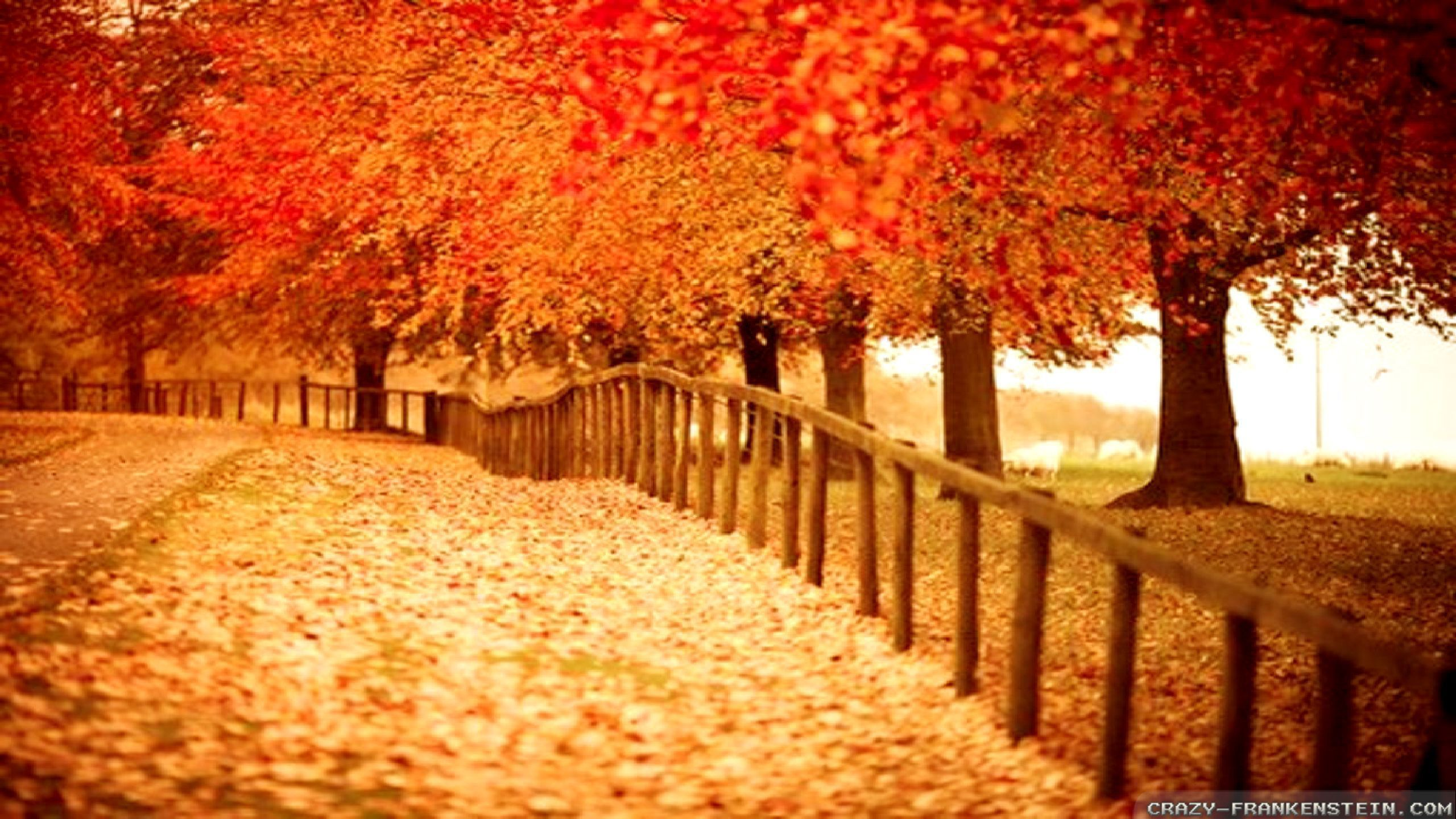 Beautiful Fall Desktop Wallpapers Top Free Beautiful Fall Desktop Backgrounds Wallpaperaccess