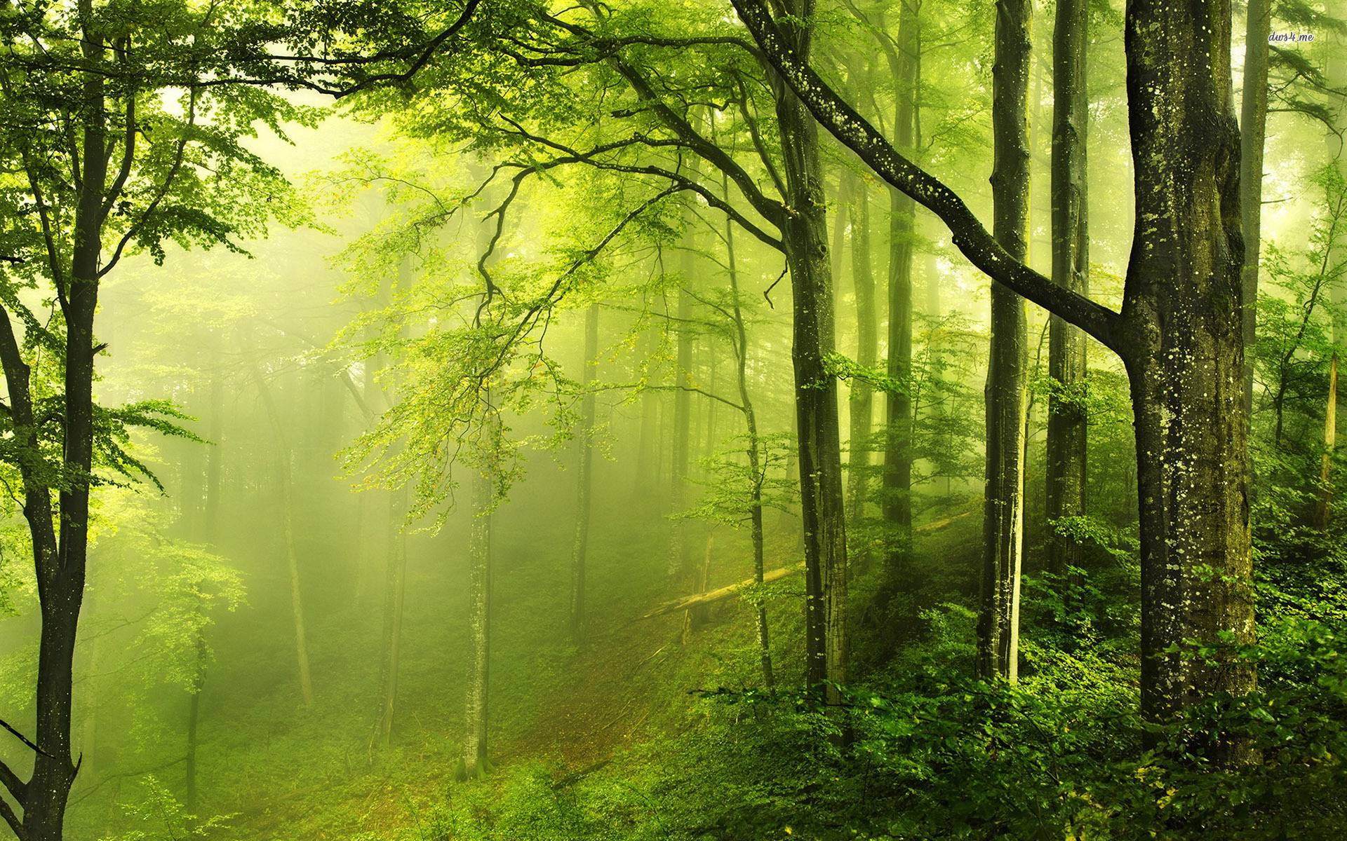Forest Green Wallpapers - Top Free