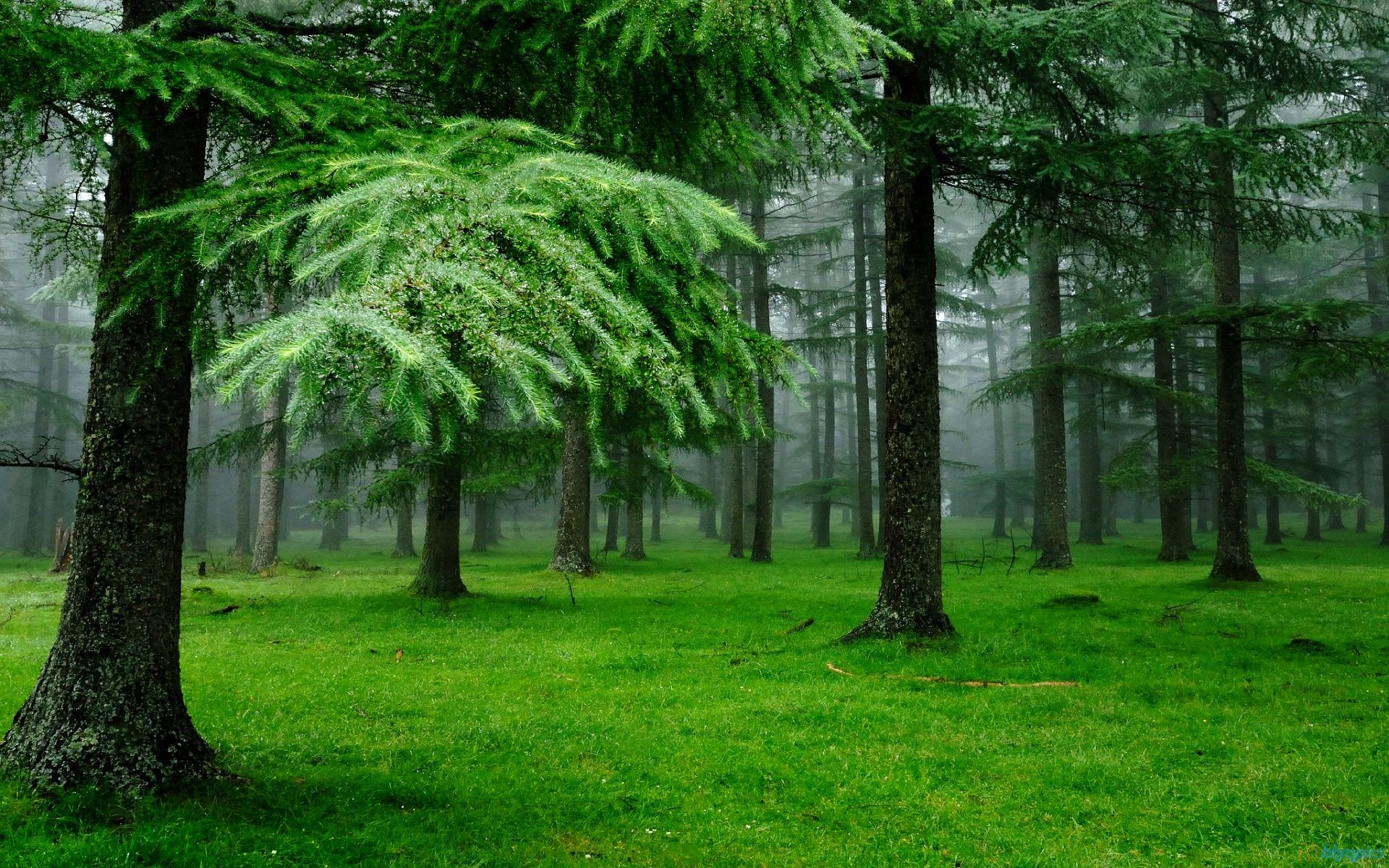 Green Nature Wallpapers Top Free Green Nature Backgrounds