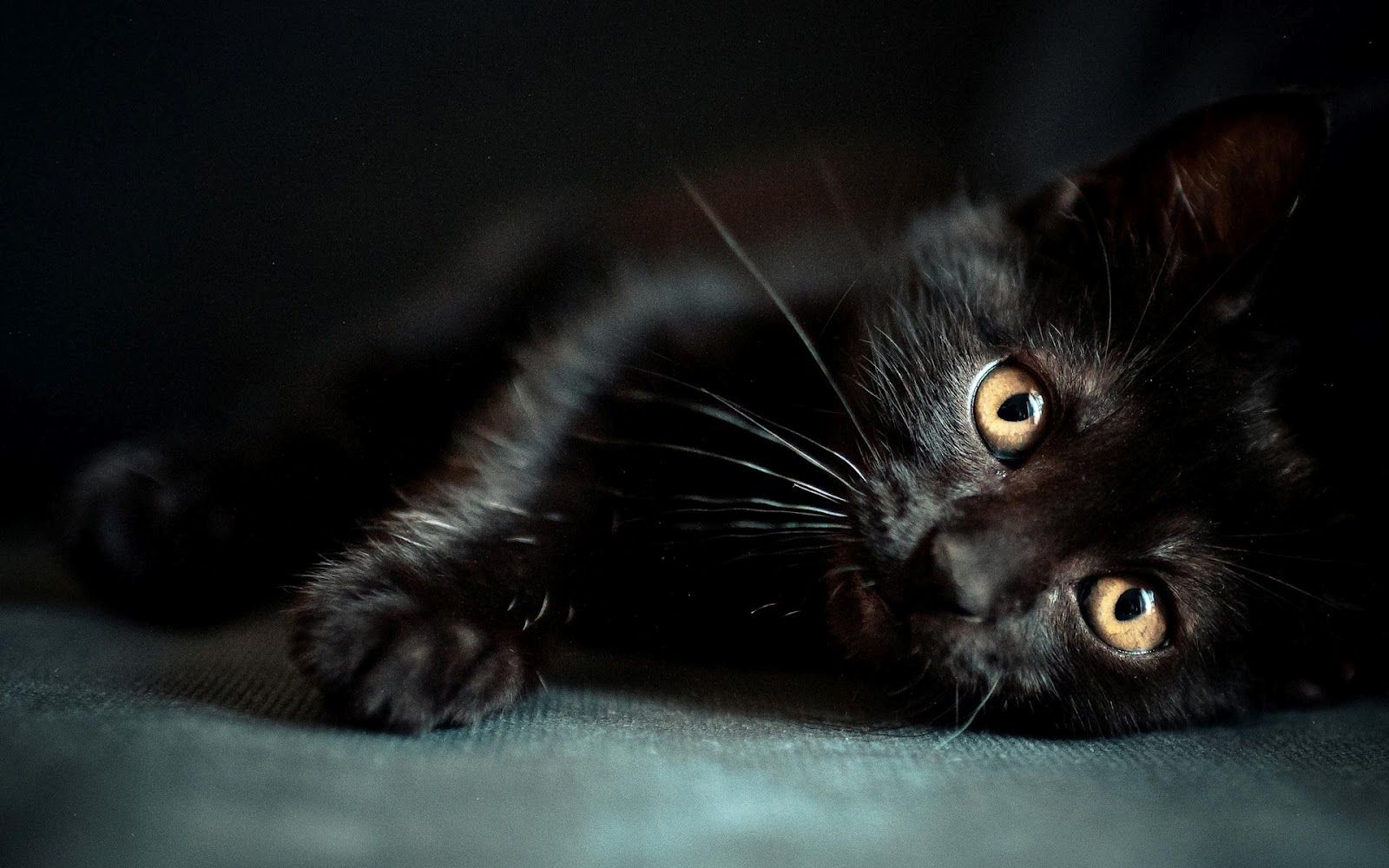 Black Kitten Wallpapers Top Free Black Kitten Backgrounds Wallpaperaccess