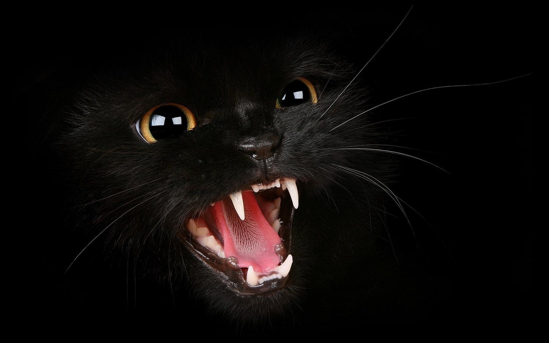 black kitten wallpapers top free