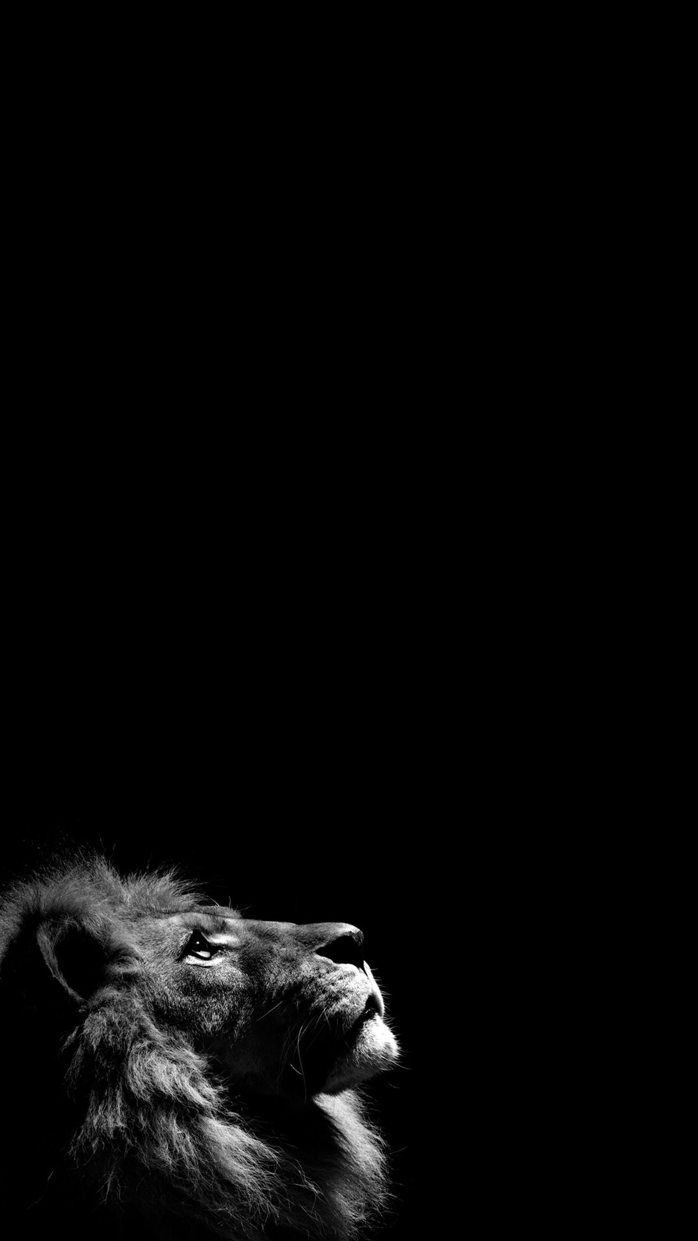 Lion Oled Wallpapers Top Free Lion Oled Backgrounds Wallpaperaccess