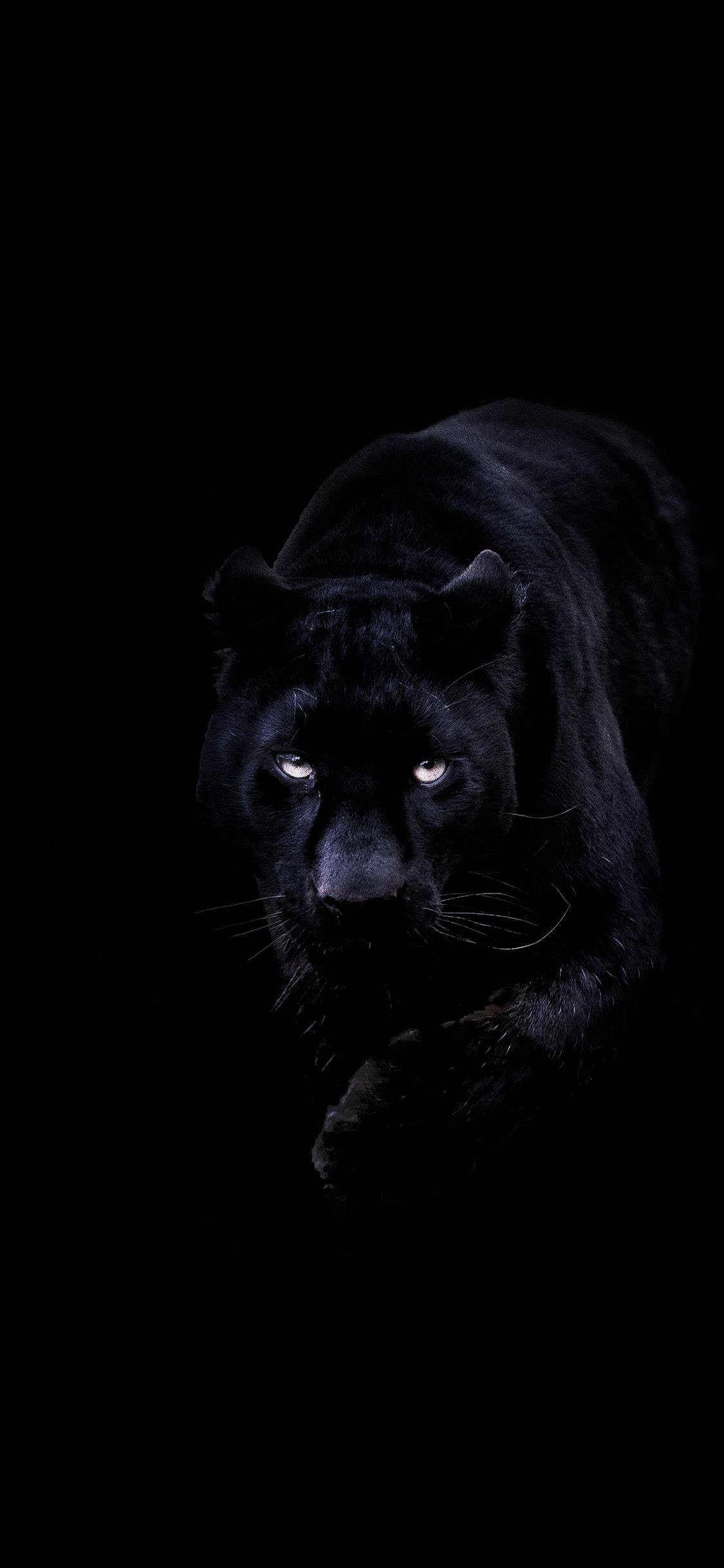 Black Panther Animal Iphone Wallpapers Top Free Black Panther Animal Iphone Backgrounds Wallpaperaccess