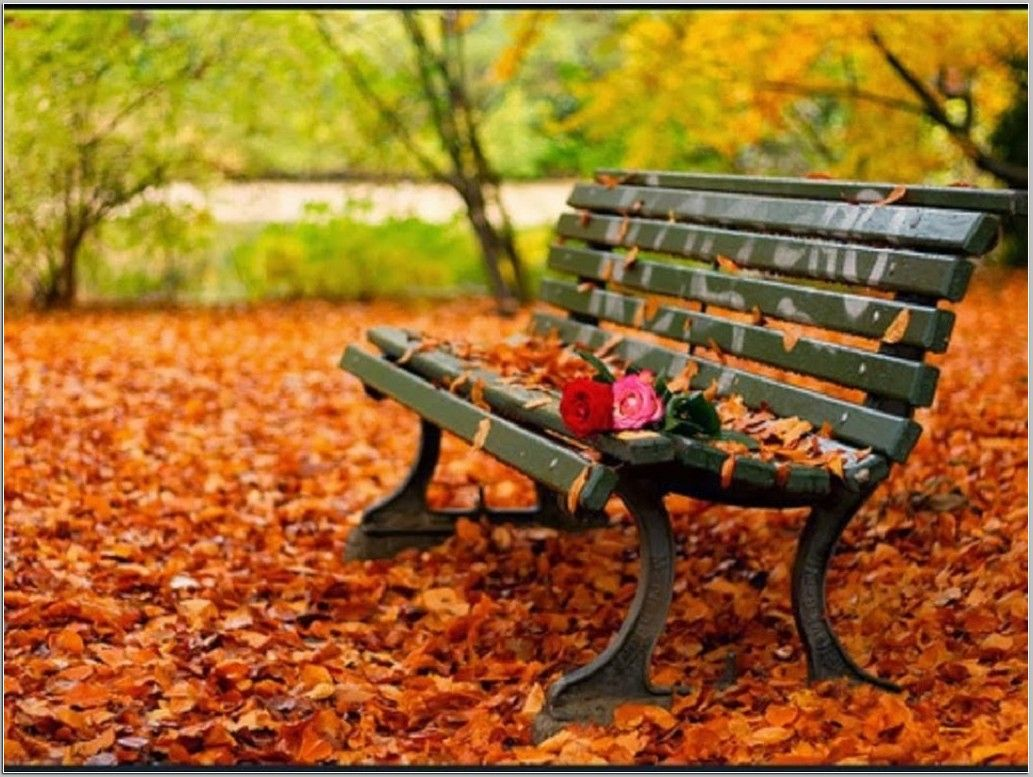 38 Best Free Bench Wallpapers Wallpaperaccess