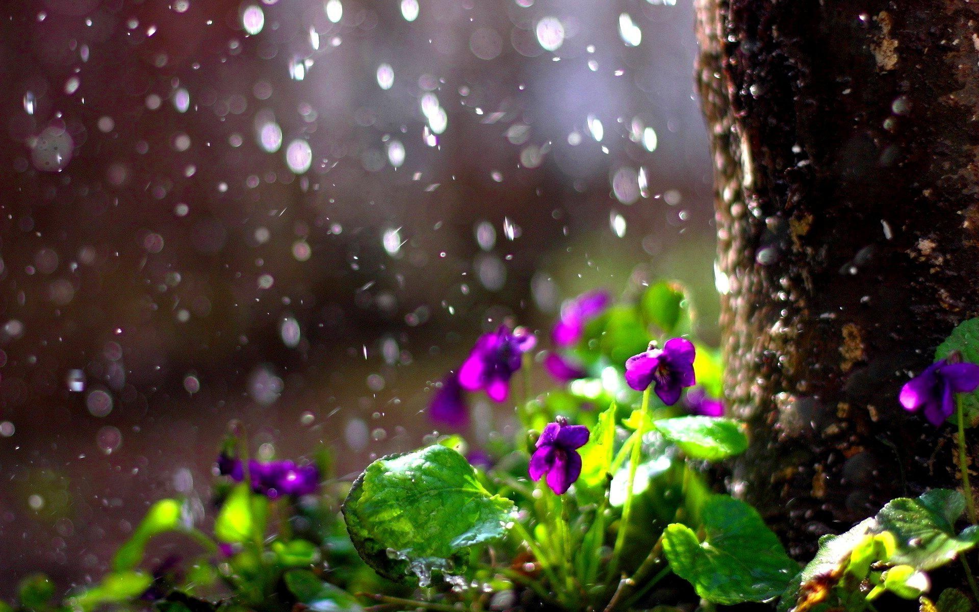 Spring Rain Wallpapers Top Free Spring Rain Backgrounds Wallpaperaccess
