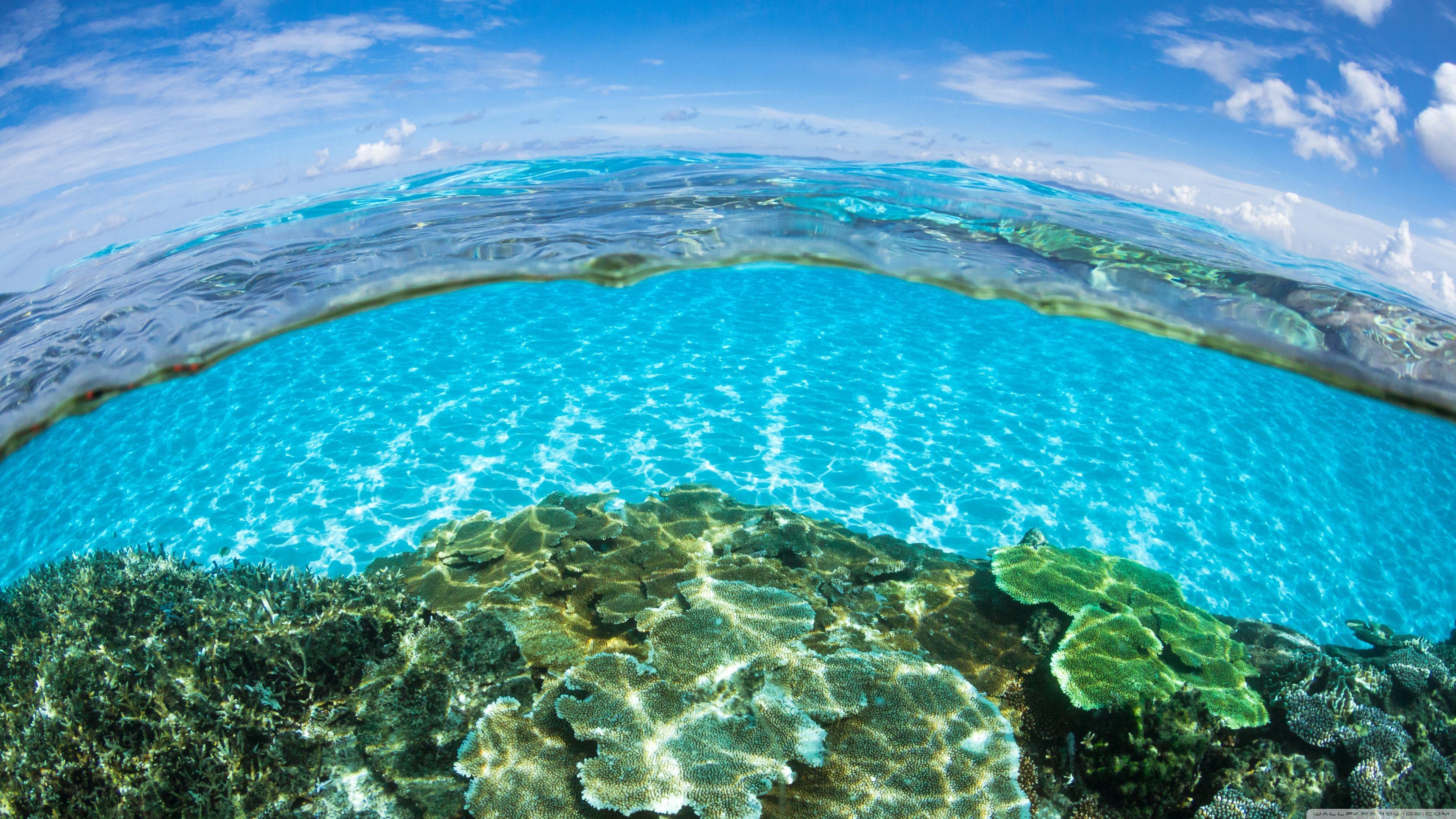 4k Ultra Hd Underwater Wallpapers Top Free 4k Ultra Hd