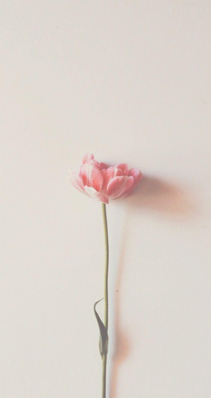 Minimalist Flower Wallpapers - Top Free Minimalist Flower ...