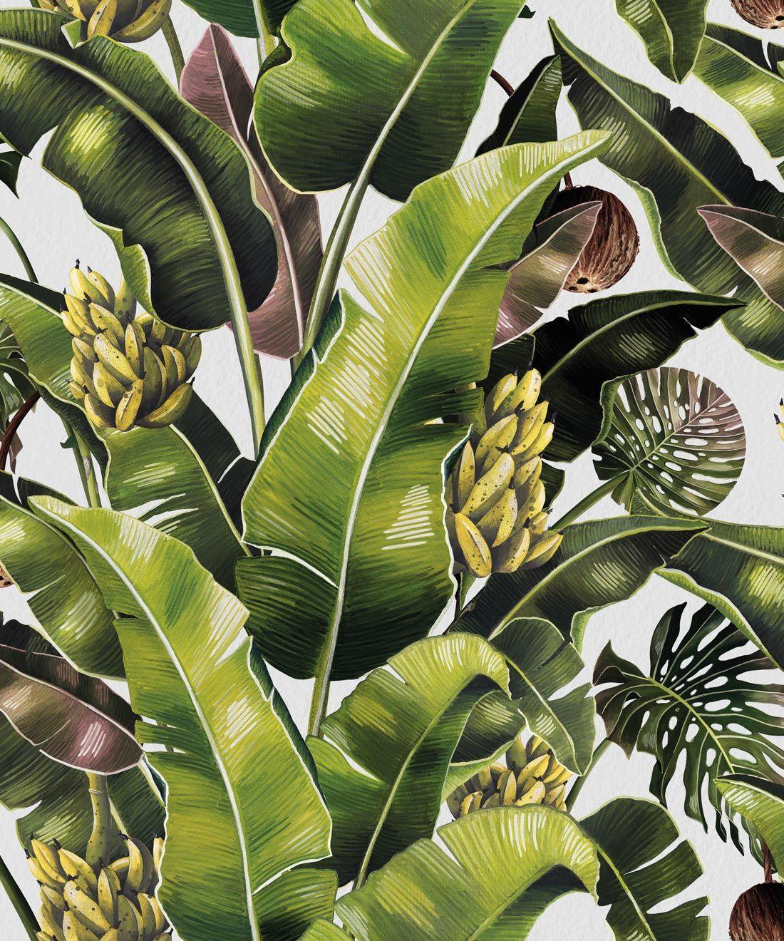 Banana Leaf Wallpapers - Top Free Banana Leaf Backgrounds ...