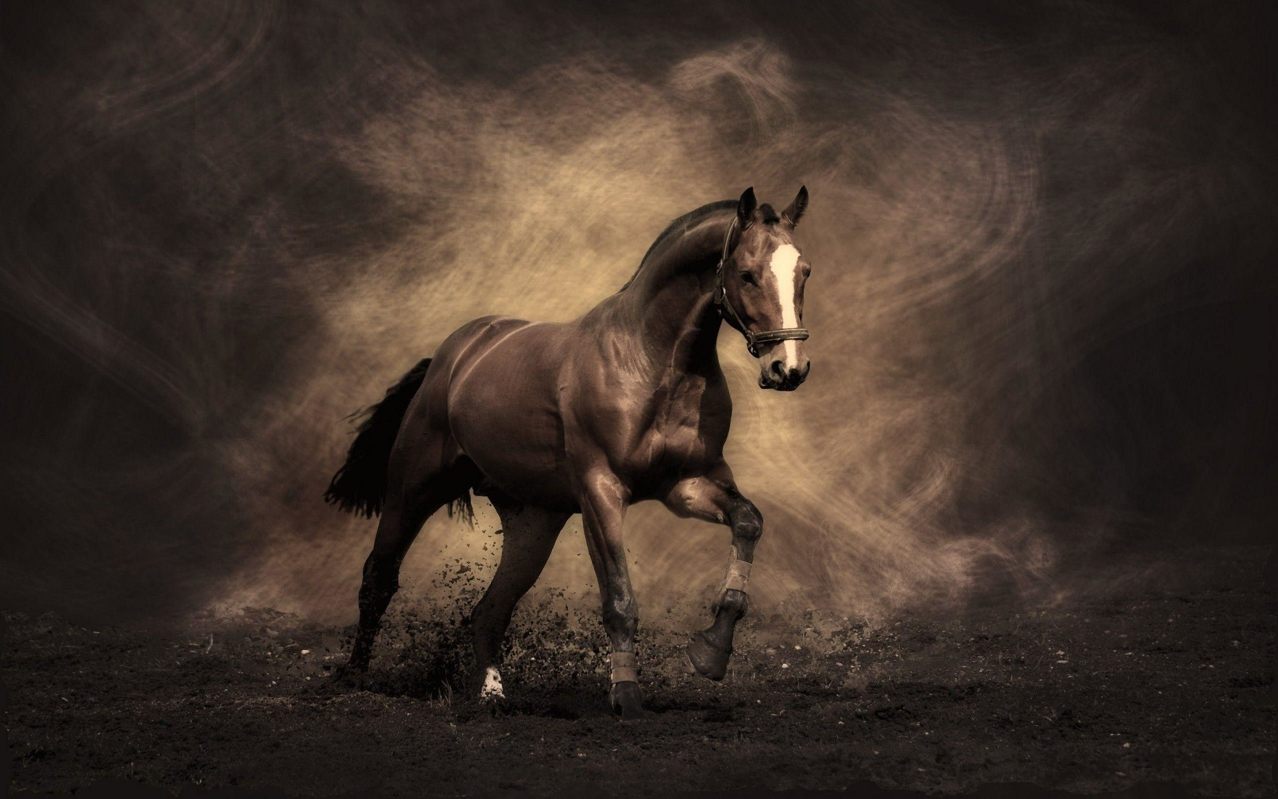 Hd Horse Wallpapers Top Free Hd Horse Backgrounds Wallpaperaccess