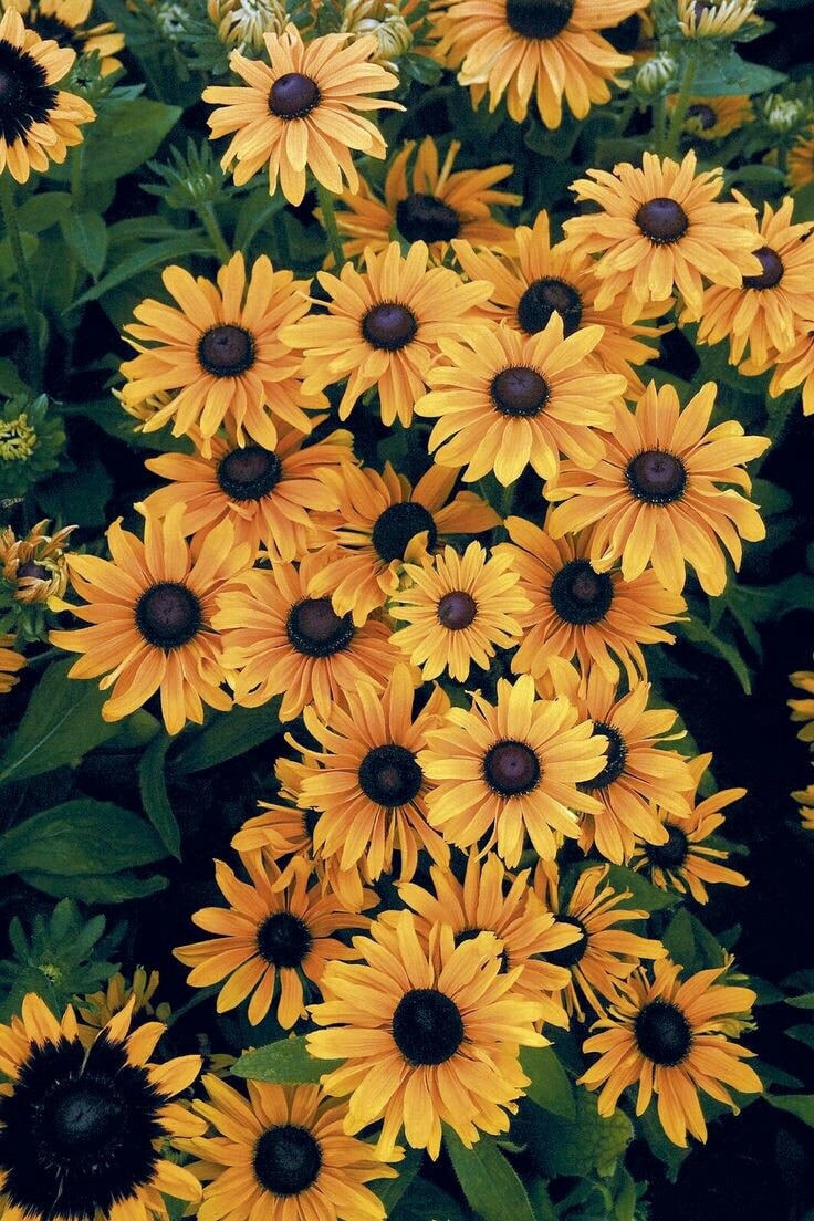 Yellow Aesthetic Sunflowers Wallpapers , Top Free Yellow