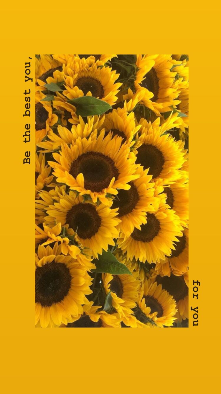 sunflower yellow tumblr aesthetic wallpapers top free sunflower yellow tumblr aesthetic backgrounds wallpaperaccess sunflower yellow tumblr aesthetic
