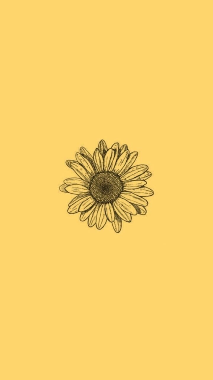 Sunflower Yellow Tumblr Aesthetic Wallpapers Top Free Sunflower