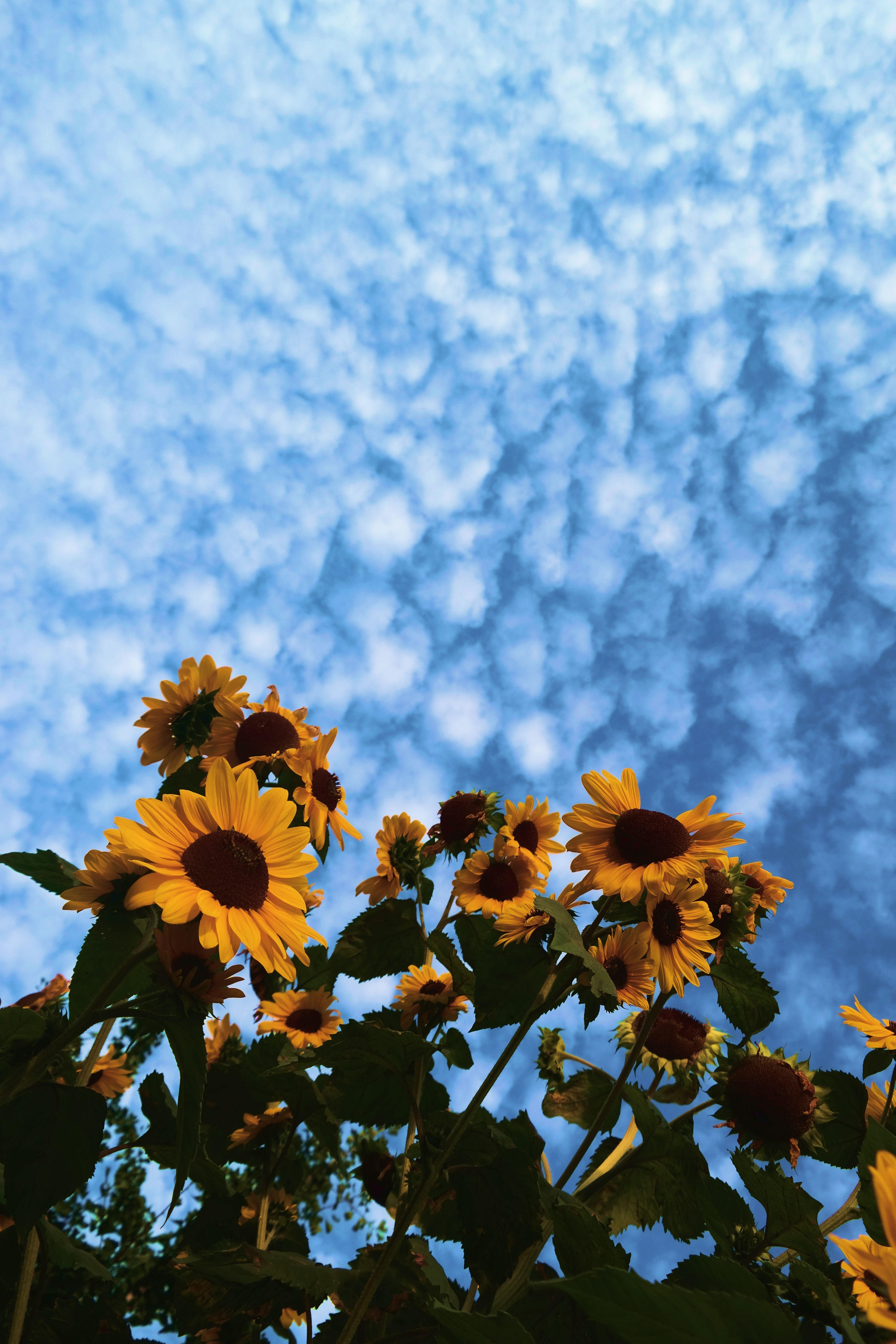 Sunflower Yellow Tumblr Aesthetic Wallpapers - Top Free ...