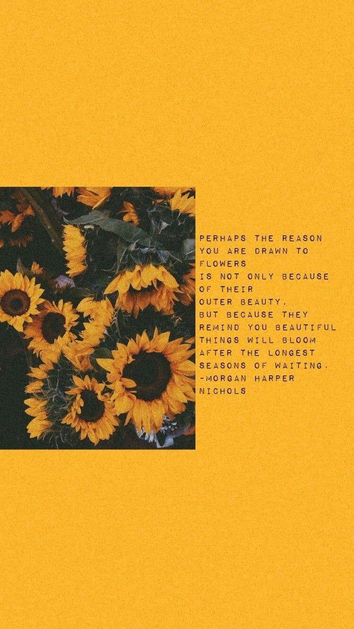 Yellow Aesthetic Sunflowers Wallpapers Top Free Yellow