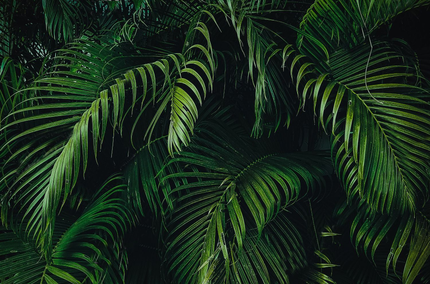 Jungle Leaves Wallpapers Top Free Jungle Leaves Backgrounds Wallpaperaccess Find the best tropical beach wallpaper desktop on wallpapertag. jungle leaves wallpapers top free