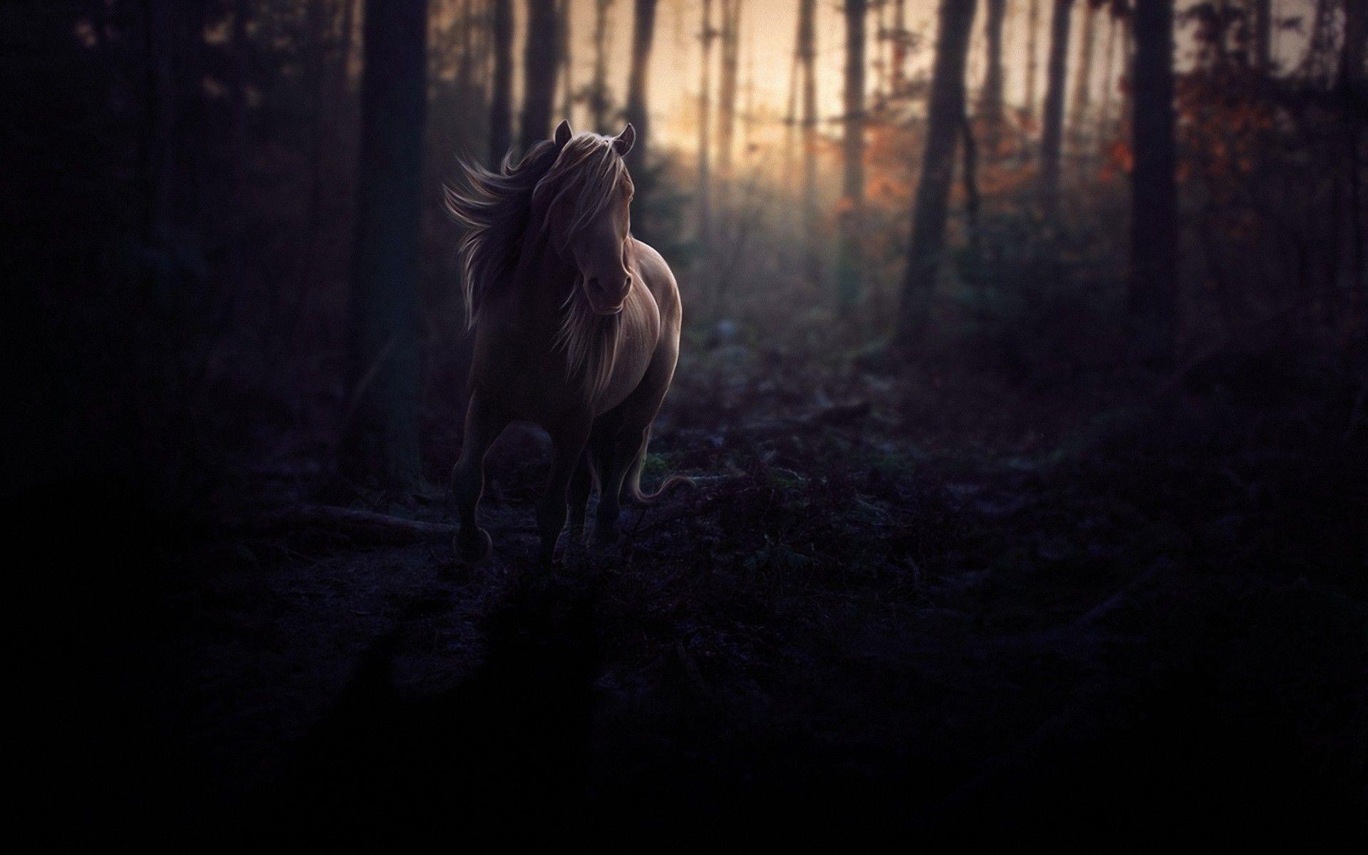 Dark Forest Hd Wallpapers Top Free Dark Forest Hd